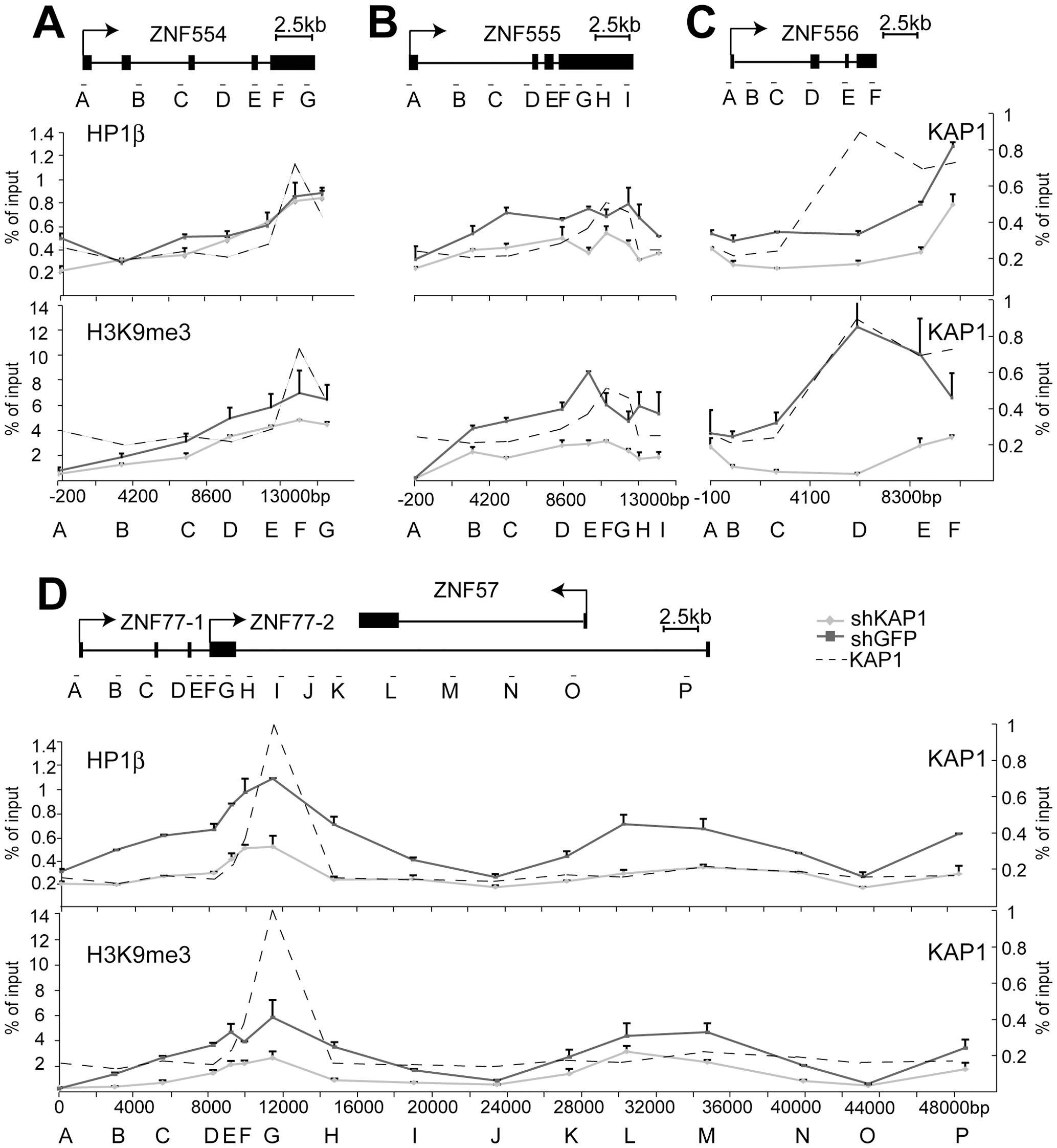 KAP1 mediates the spread of HP1β and H3K9me3 at KRAB–ZFP clusters.