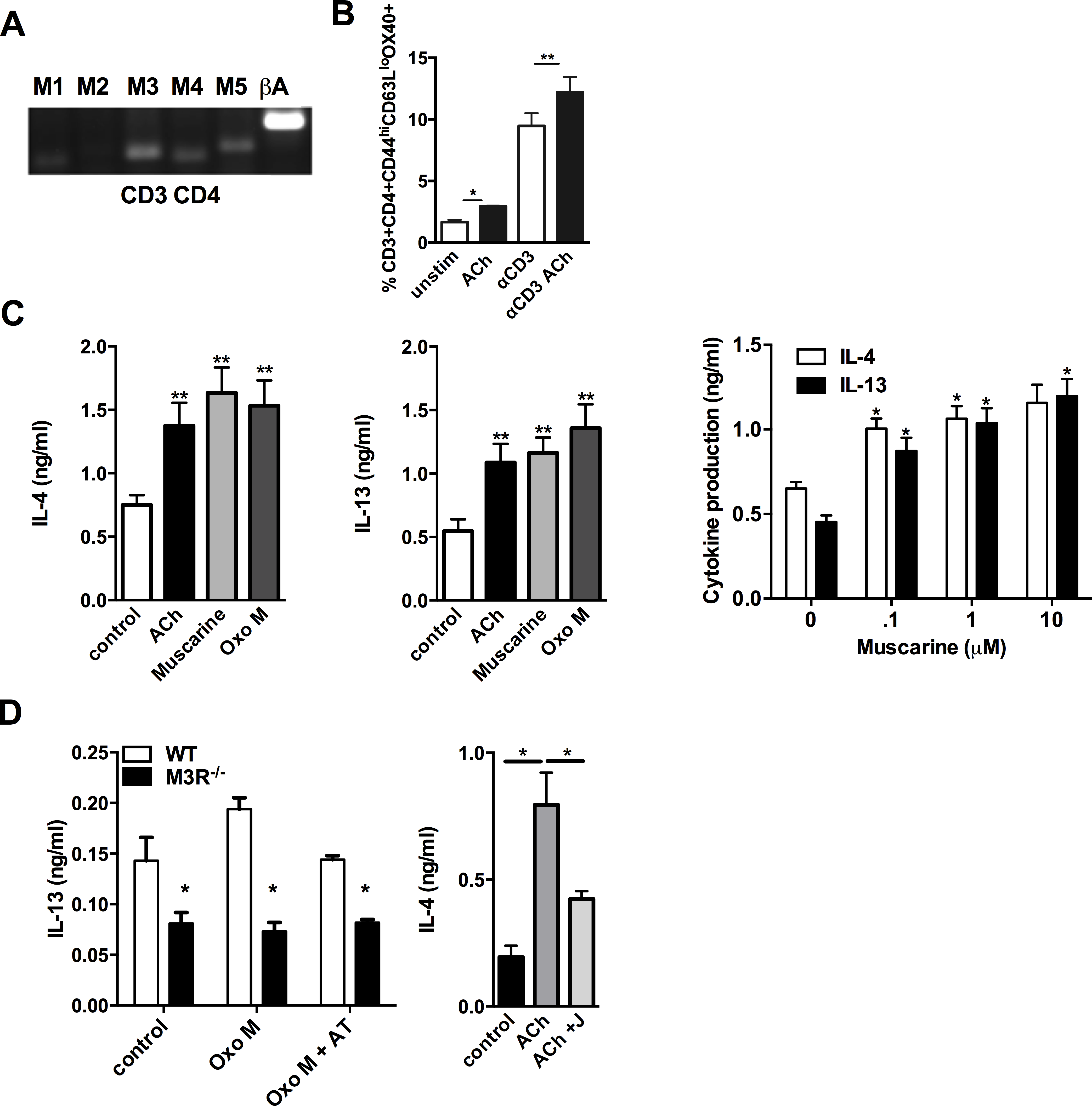Signalling via the M3R potentiates Th2 cytokine production during <i>N. brasiliensis</i> infection.