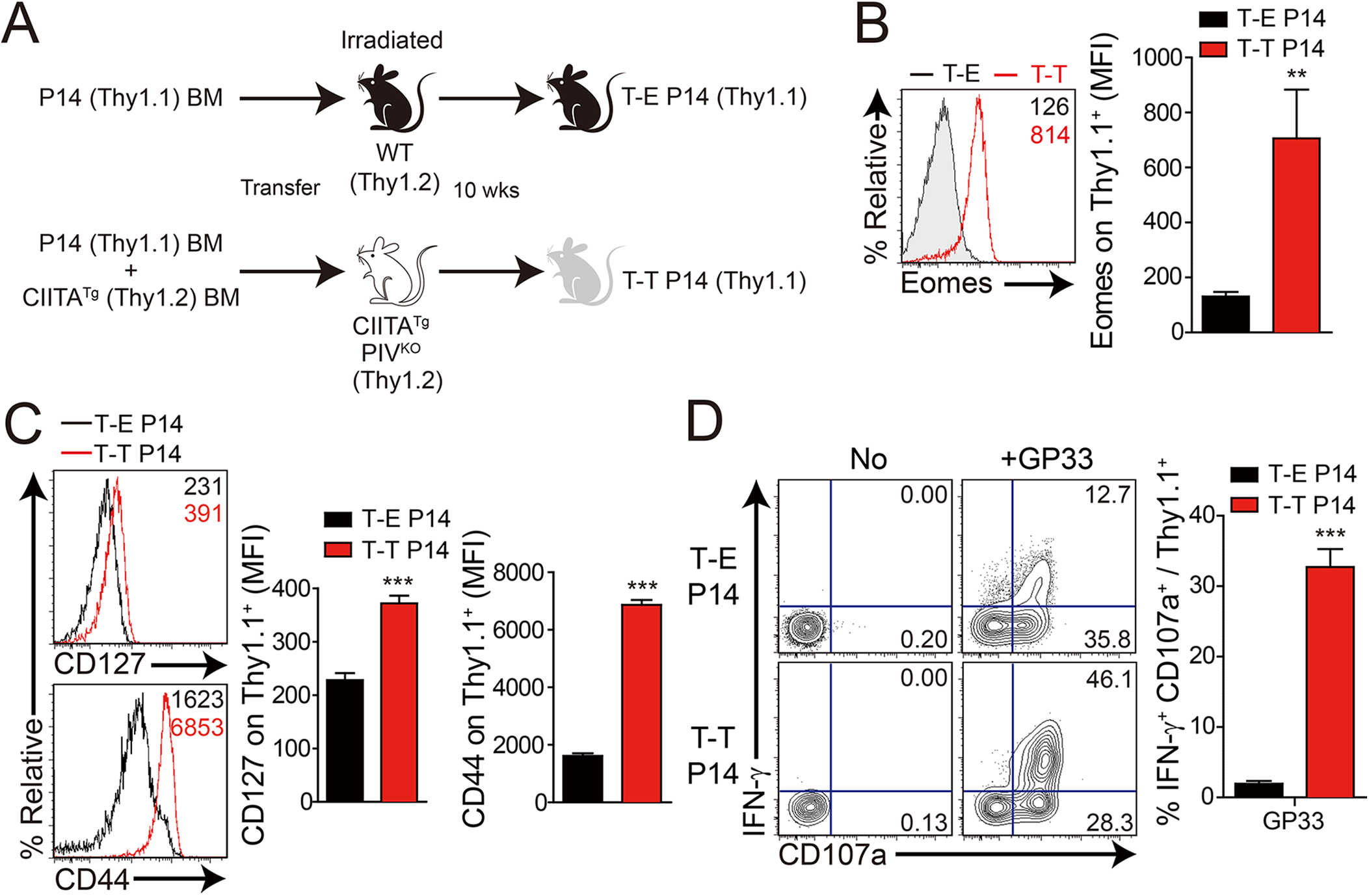 Generation and characterization of virus-specific IL–4 induced innate CD8<sup>+</sup> T cells.