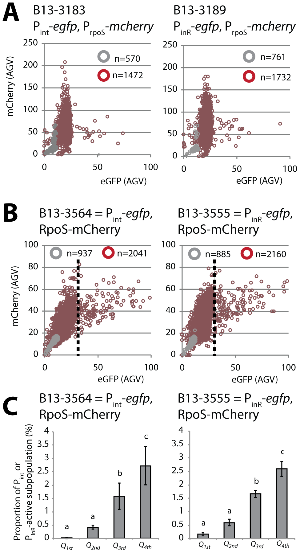 Correlation between <i>rpoS</i> and either P<i><sub>int</sub></i> or P<i><sub>inR</sub></i> expression in <i>P. knackmussii</i> B13.