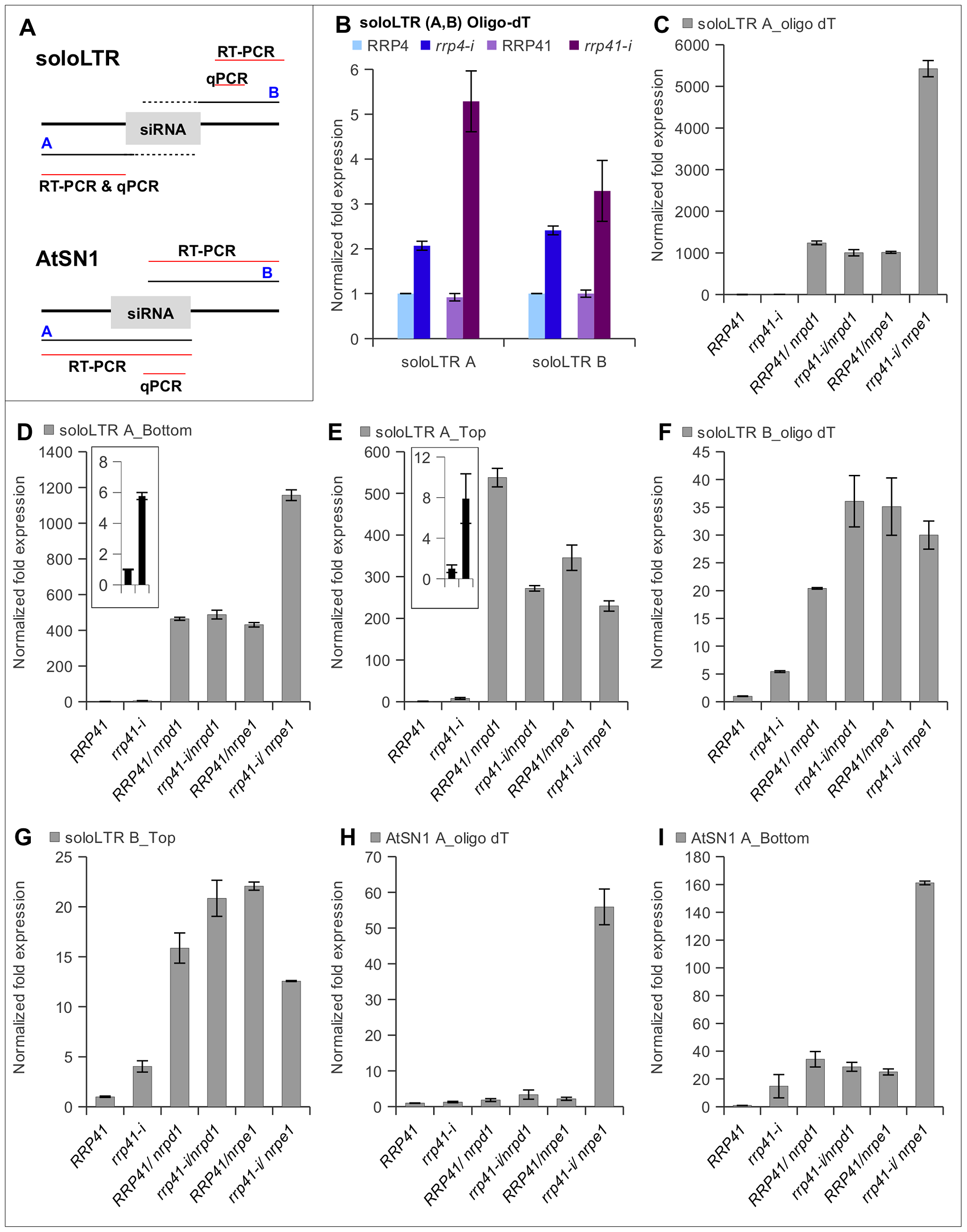 Effect of exosome subunits depletion on expression of ncRNA transcripts from RdDM-regulated loci.