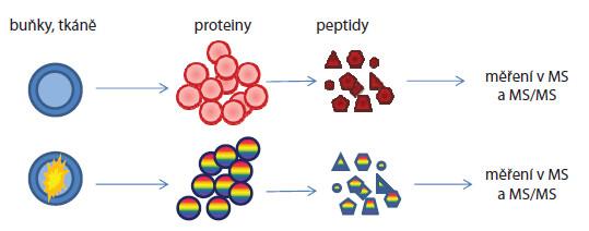 Postup kvantifikace proteinů proteomickými metodami bez použití značení.