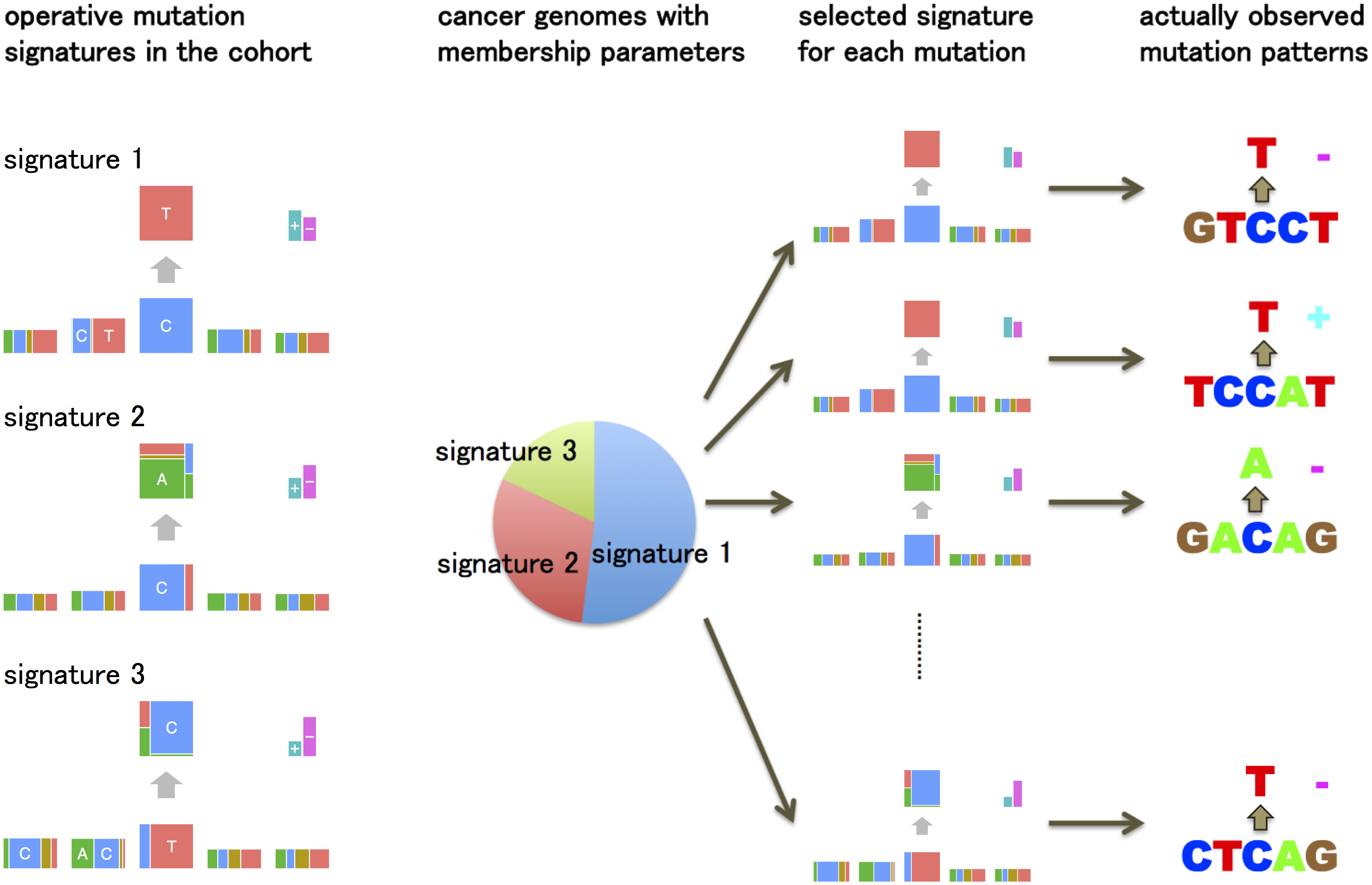 An overview of the generative model of somatic mutations proposed in this paper.