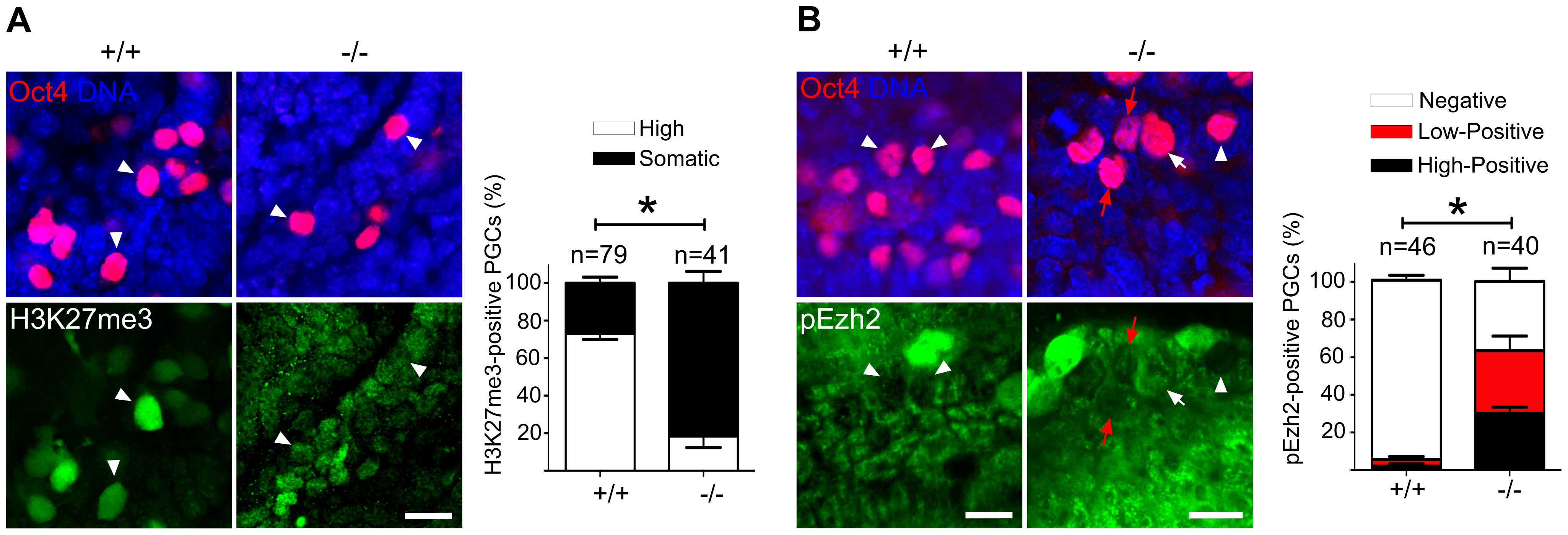 Majority of Mad2l2 deficient PGCs fail to upregulate H3K27me3.