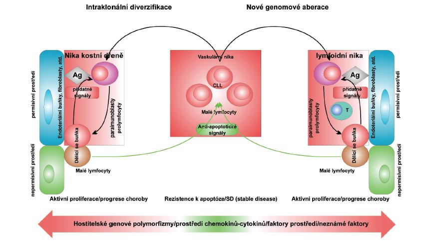 Hypotetický model vysvětlující klíčovou roli mikroprostředí v udržování a progresi chronické lymfocytární leukemie. EC: endothelial cells; Ag: antigen. Podle: Deaglio S, Malavasi F. Haematologica 2009; 94: 752-756.