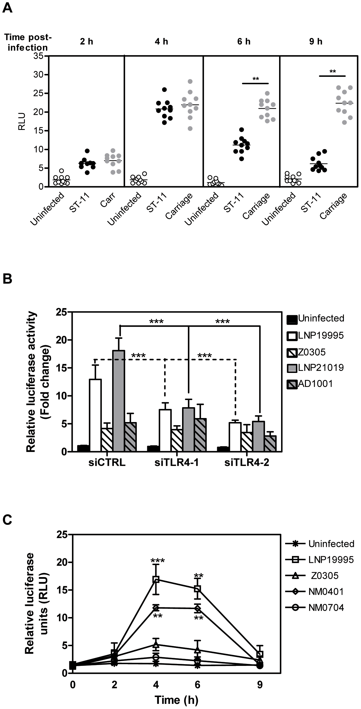 Invasive ST-11 but not carriage isolates impair NF-κB transcriptional and DNA binding activities in Hec-1B cells during the late steps of infection.