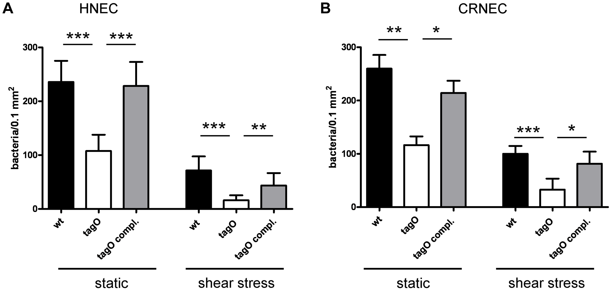 WTA-mediated adhesion of <i>S. aureus</i> to HNECs and CRNECs.