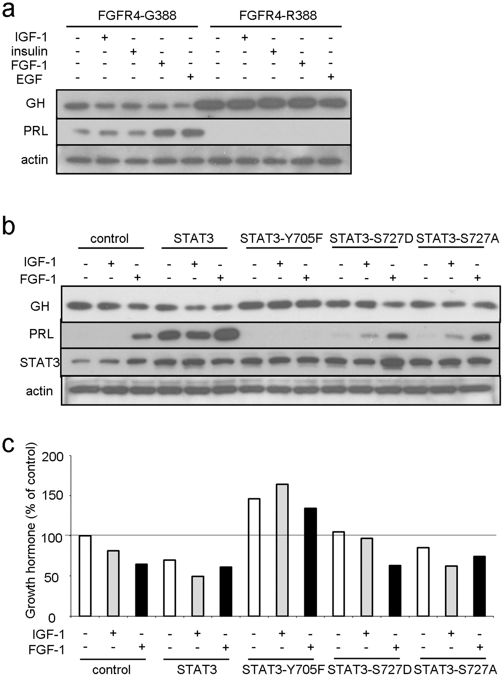 FGFR4-G388, but not FGFR4-R388, signals through pY-STAT3 to regulate pituitary hormone gene expression.
