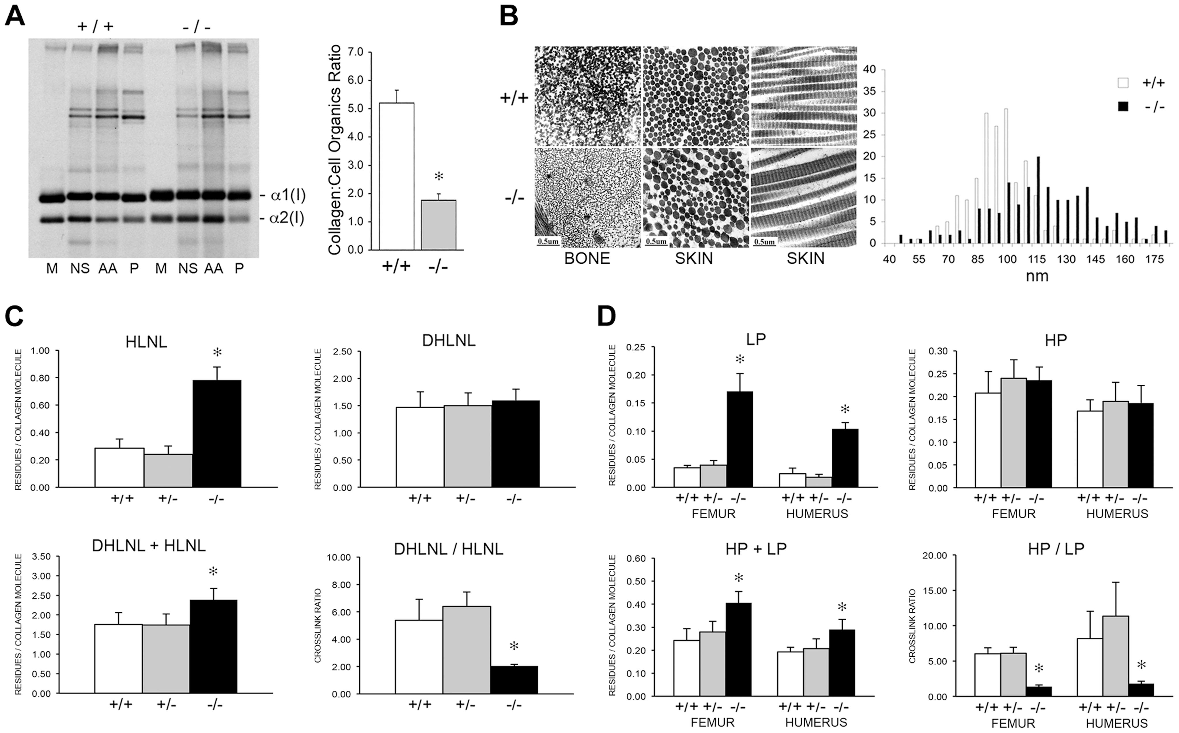 Dysregulation of collagen deposition and fibril assembly.