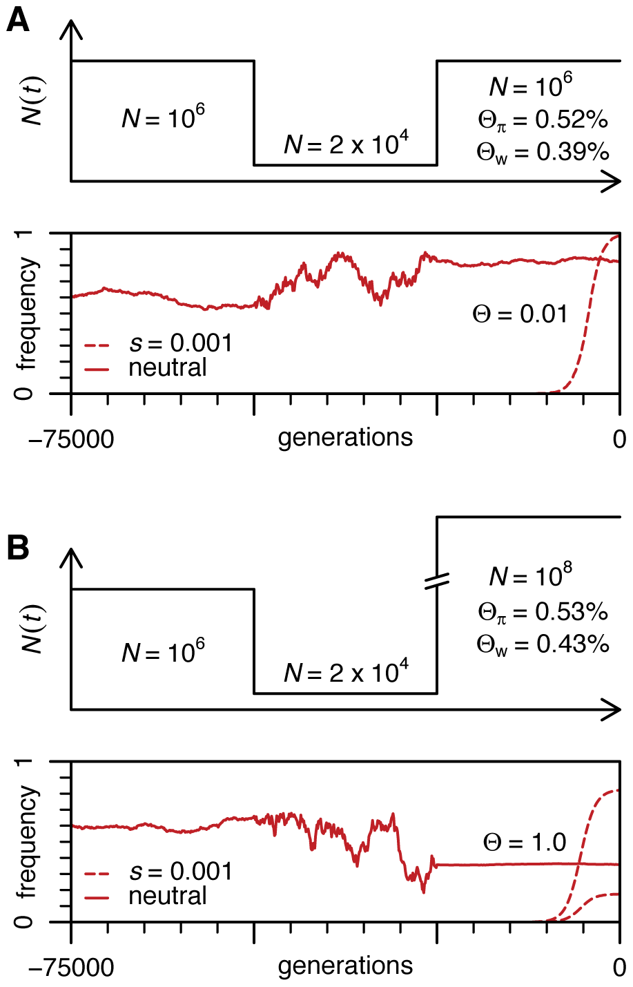 Population dynamics of neutral and adaptive alleles in a population with a bottleneck.