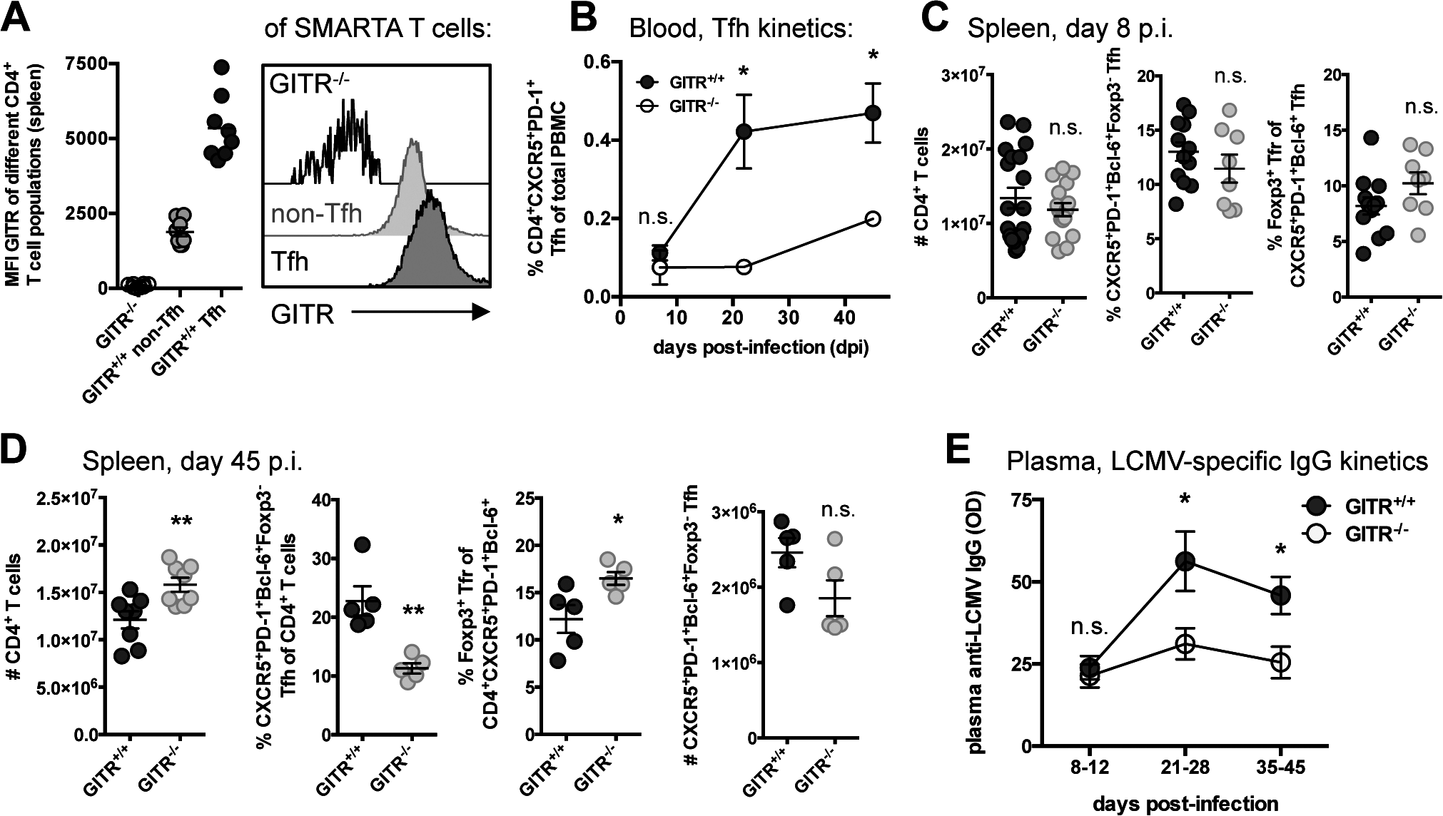 GITR<sup>-/-</sup> mice have defective follicular helper CD4 T cell responses following LCMV cl 13 infection.