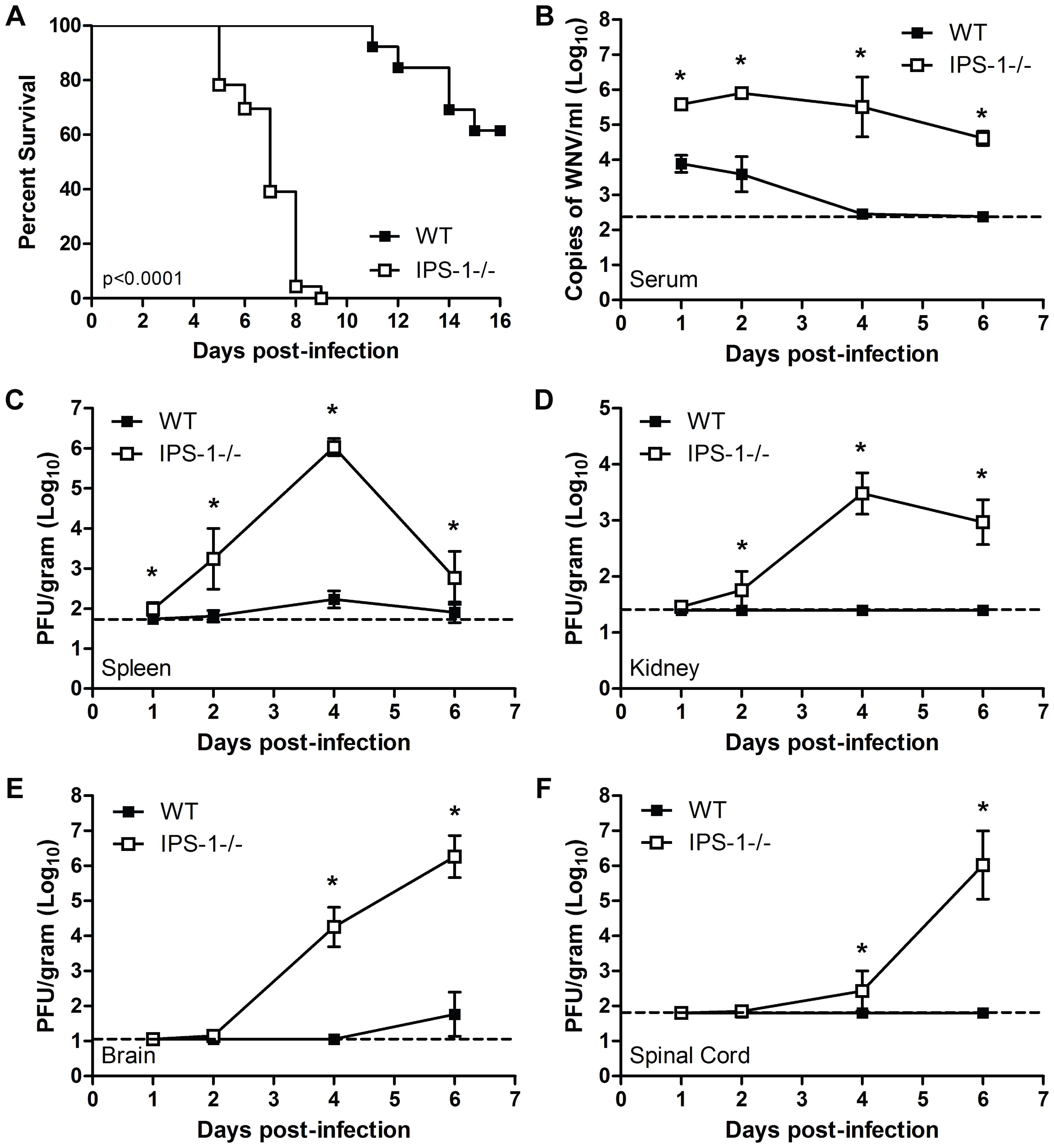 Virologic analysis in wild type and IPS-1<sup>−/−</sup> mice.