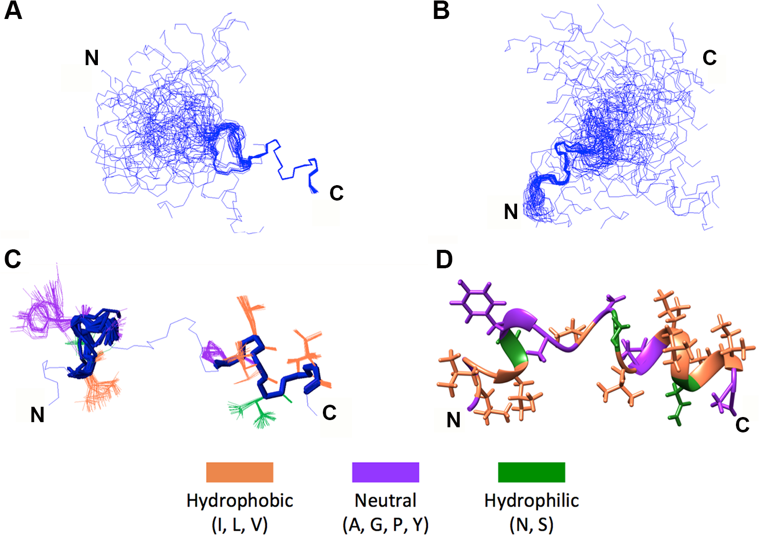NMR structural determination of a helix-loop-helix conformation in p15HPpep.