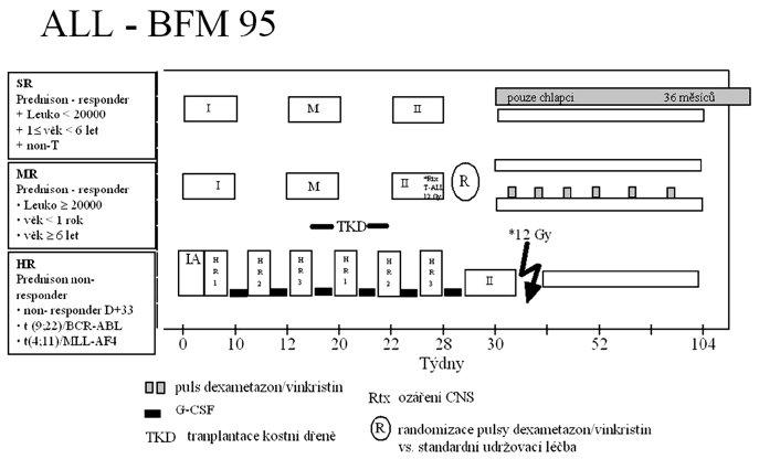 Protokol ALL-BFM 95.