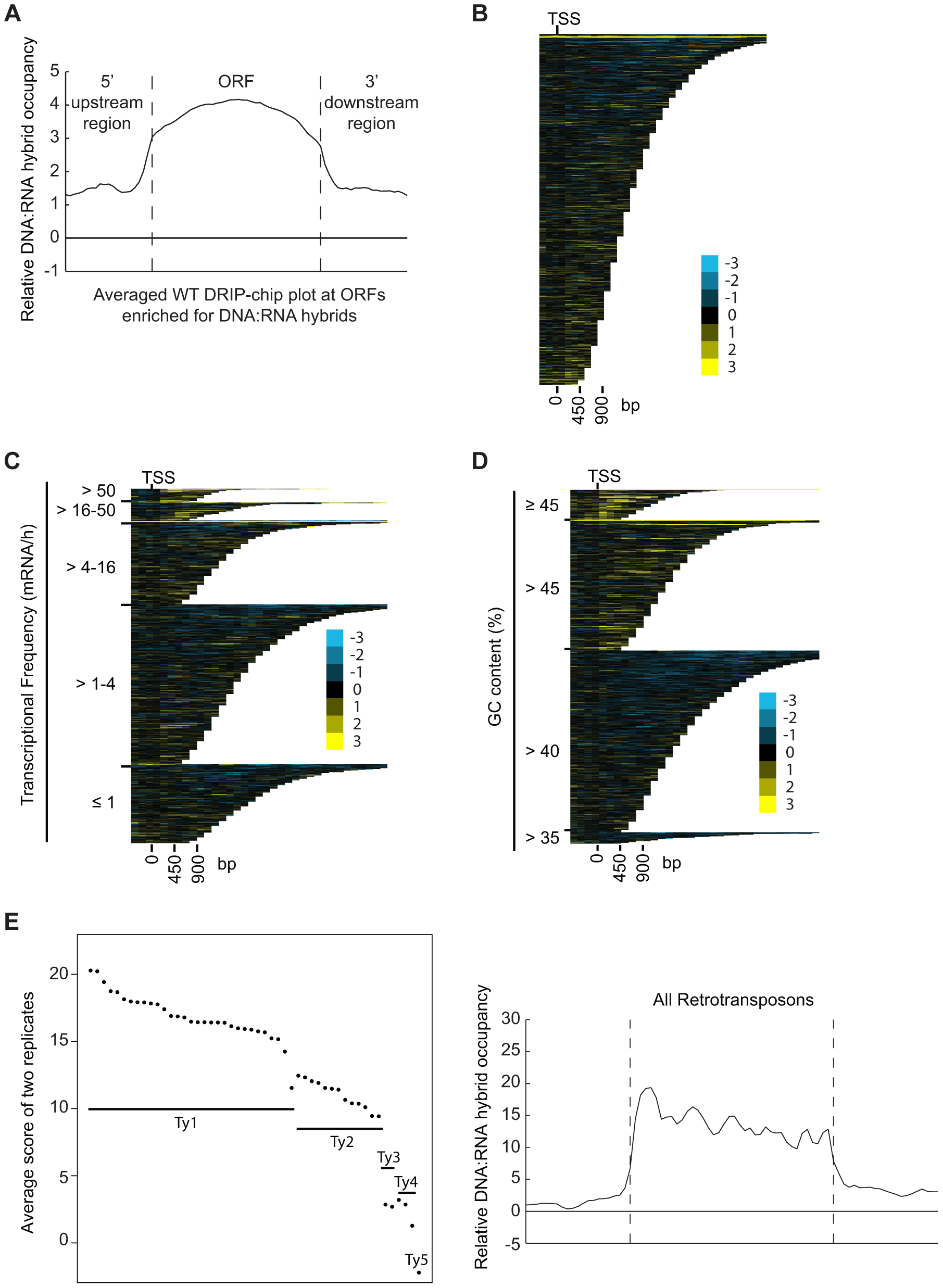 DNA:RNA hybrids are enriched at protein-encoding genes and retrotransposons of higher transcriptional frequency.