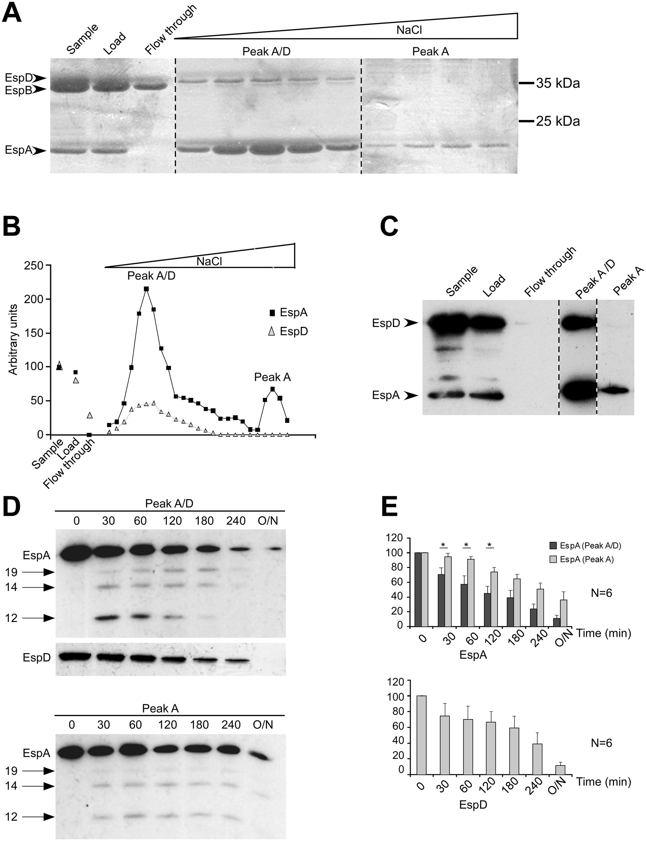 EspC preferentially targets EspA/EspD-containing structures.