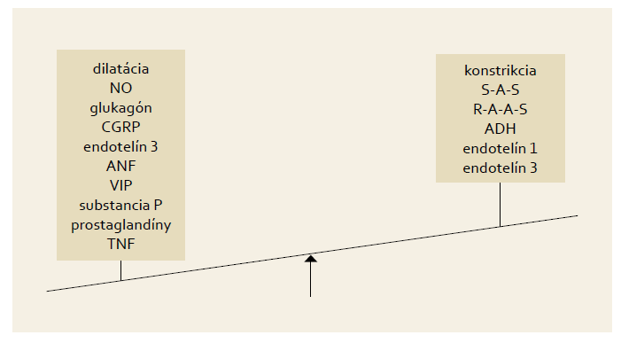 Splanchnické riečisko pri hepatorenálnom syndróme [8]. Fig. 1. Splanchnic bed with hepatorenal syndrome [8].