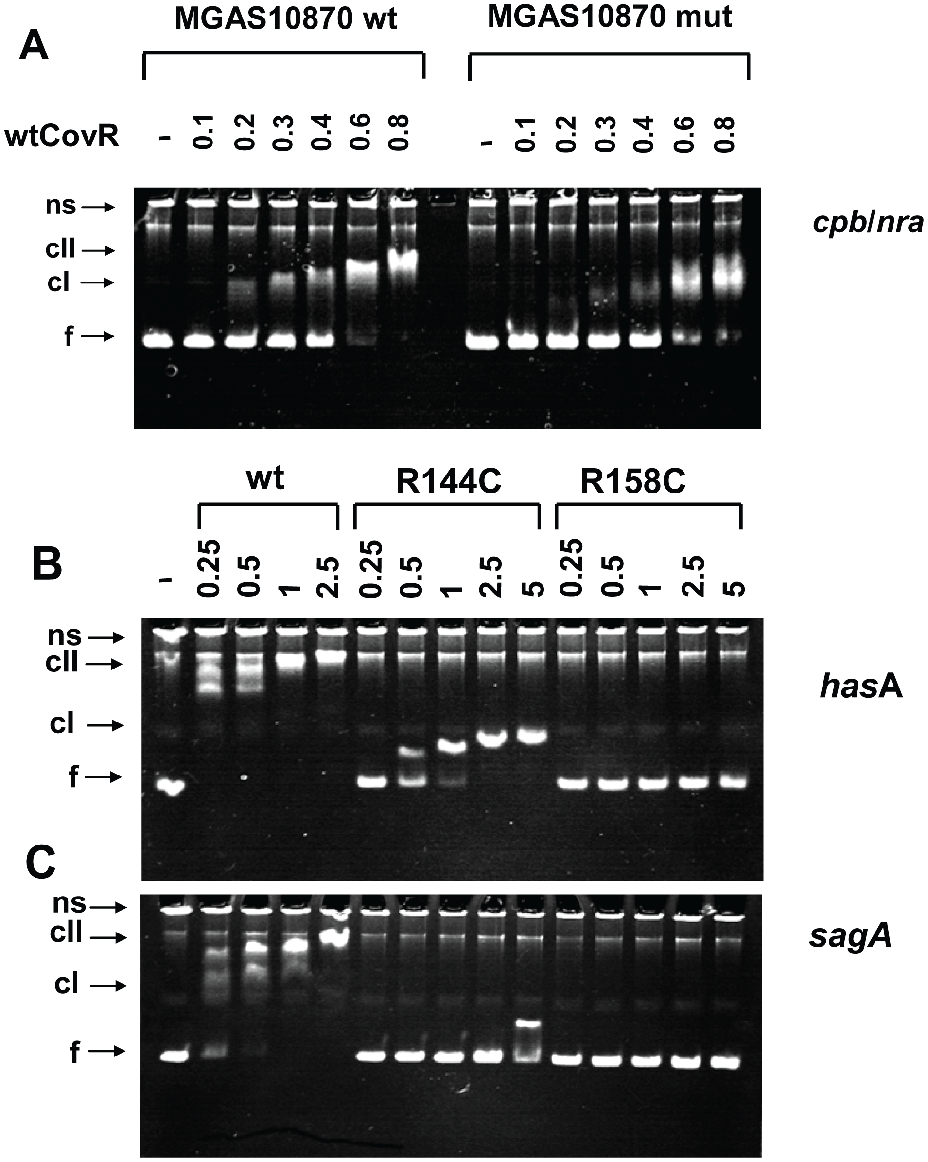 Electromobility shift assays of recombinant CovR DNA binding.