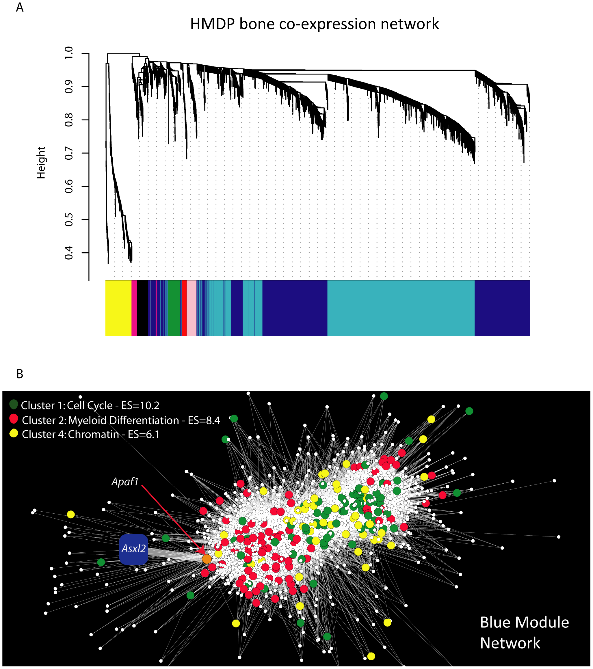 Gene co-expression network analysis reveals that <i>Asxl2</i> is connected to genes involved in myeloid cell differentiation.