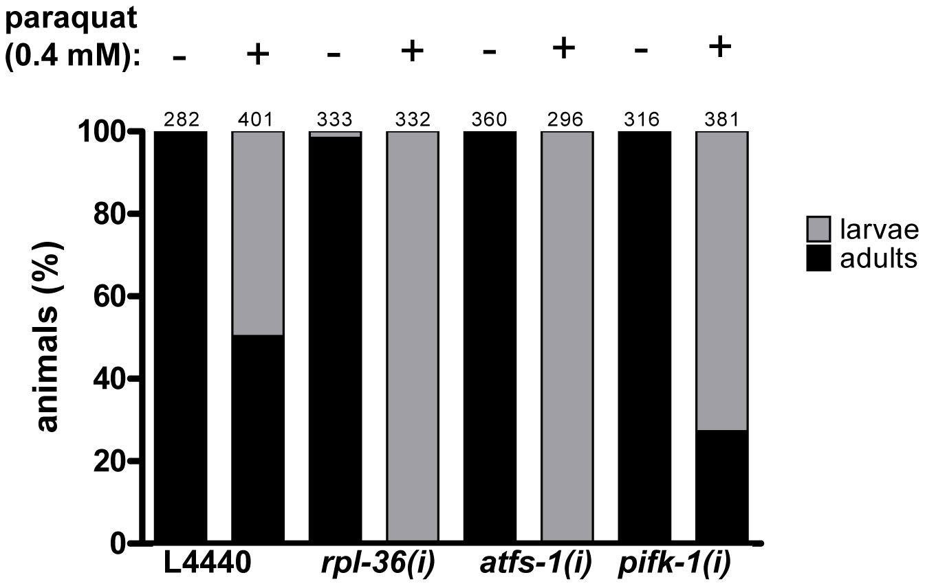 The downregulation of <i>rpl-36</i>, <i>atfs-1</i>, and <i>pifk-1</i> increases paraquat sensitivity.