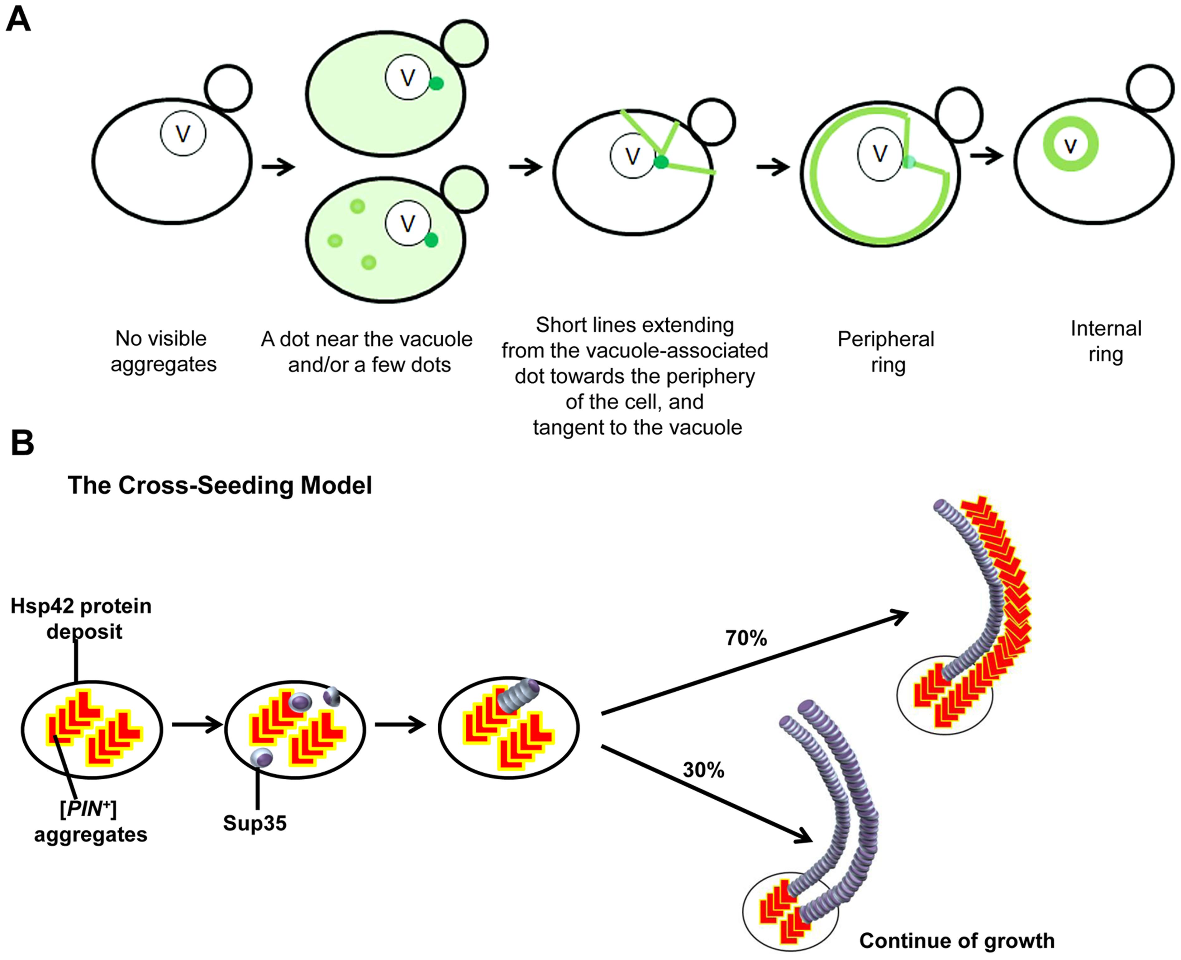 Models we propose to explain <i>de novo</i> Sup35 aggregation.