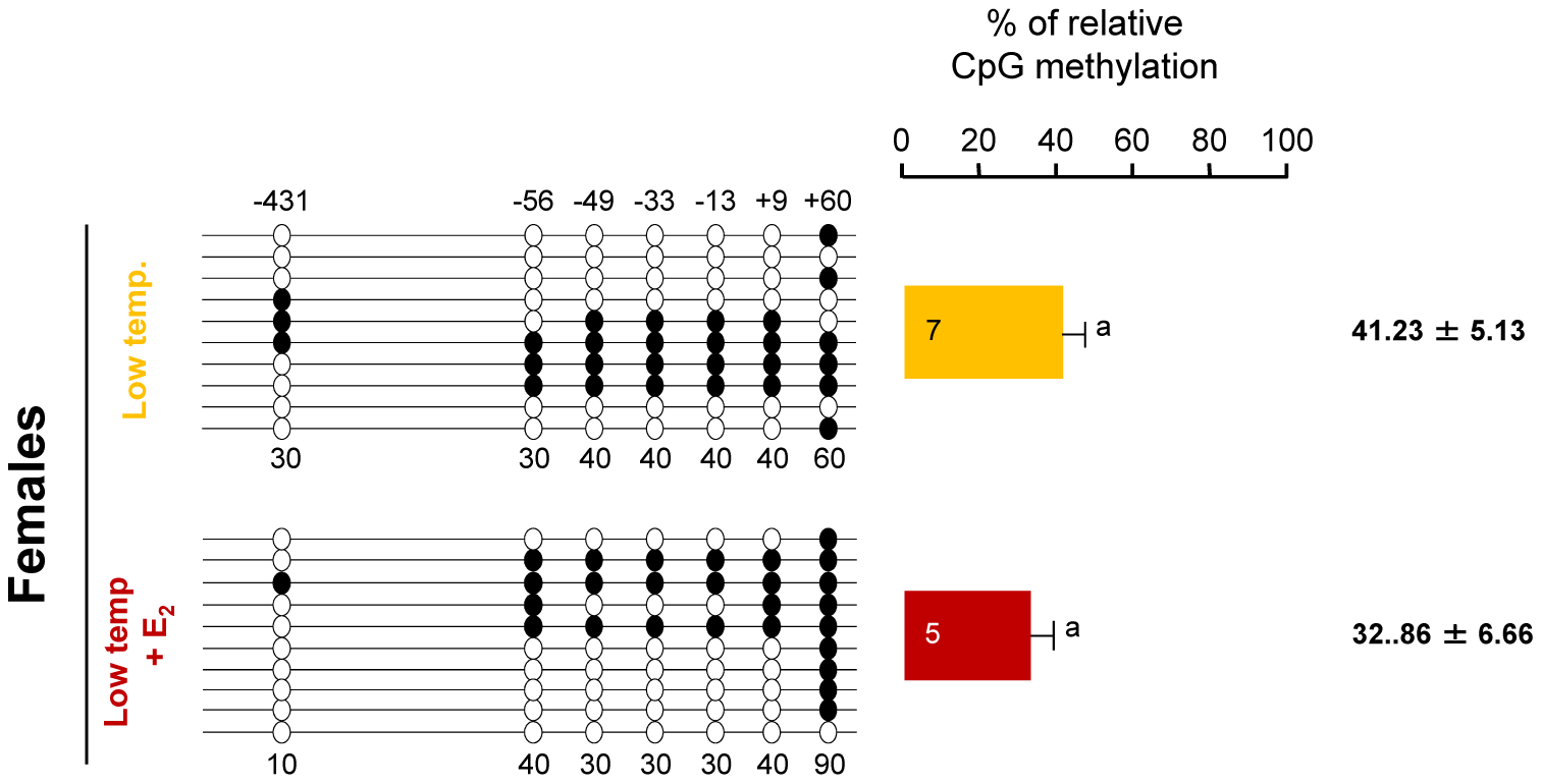 Effects of estradiol-17ß treatment on sb <i>cyp19a</i> promoter methylation in one-year-old sea bass.