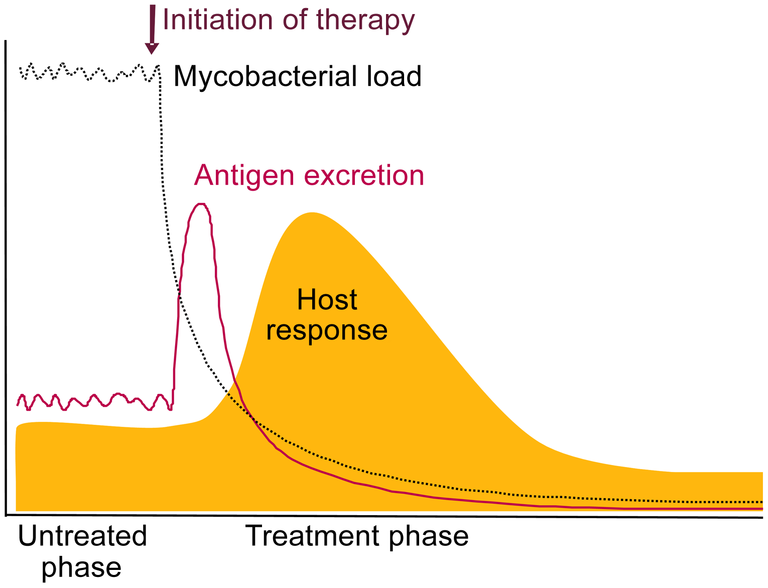 Schematic representation of the expected release of TB antigens and consequential host antibody response upon initiation of treatment.