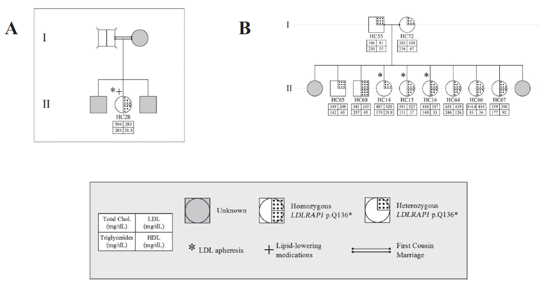 Familial cases of <i>LDLRAP1</i>. Pedigrees of two families A and B with only the p.Q136* variant and the associated phenotypes for each member.