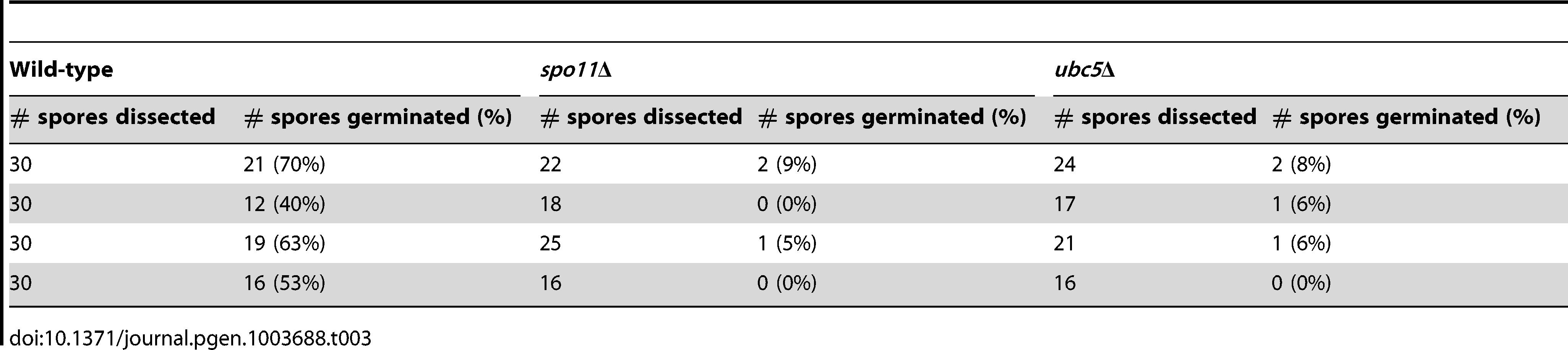 Viability of wild type, <i>spo11</i>Δ, and <i>ubc5</i>Δ unisexual reproduction progeny.