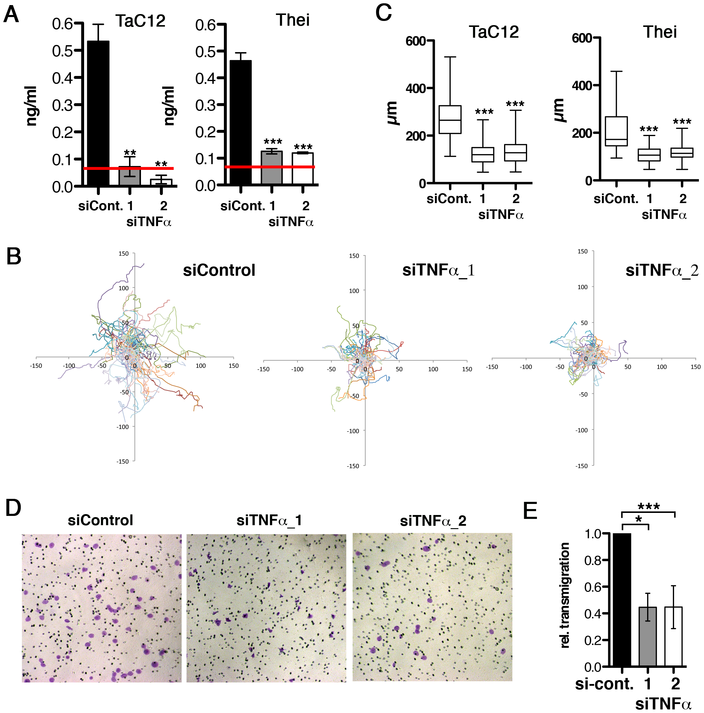 Host cell-secreted TNFα is required for parasite-induced motility.