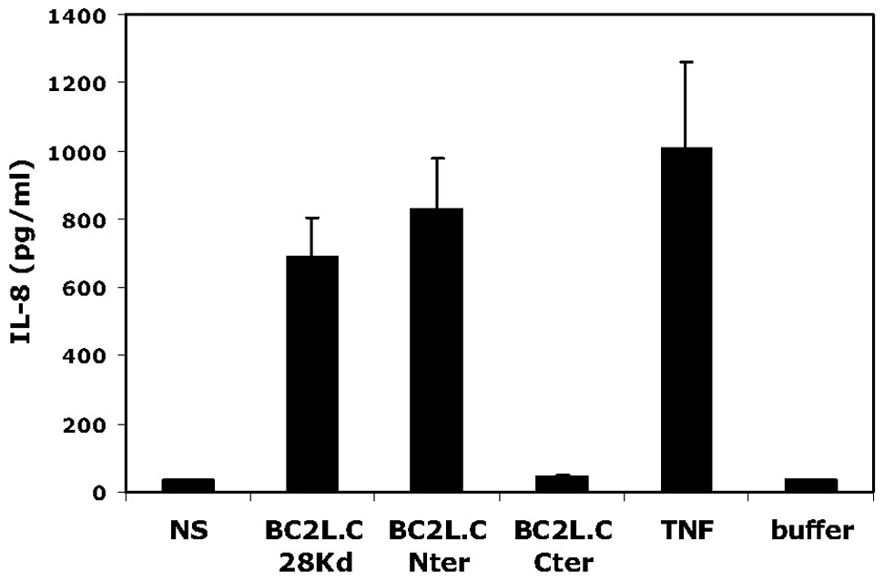Activation of respiratory epithelial cells by BC2L-C and its separate domains.