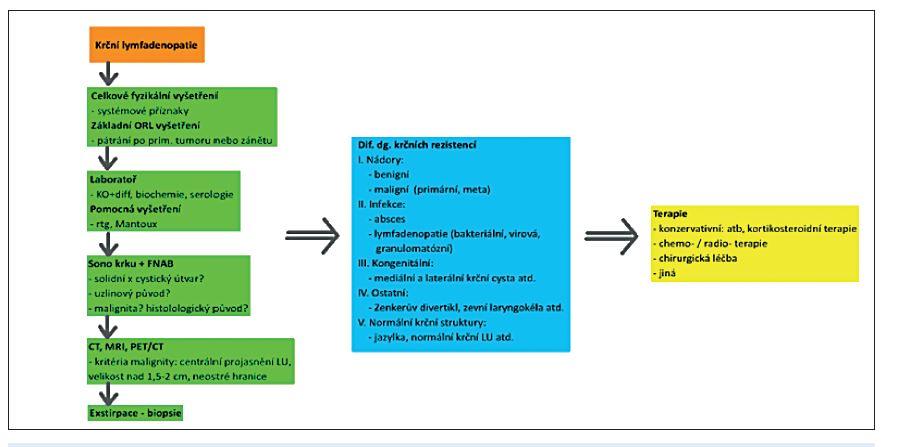 Diagnostický postup při nálezu krční rezistence.