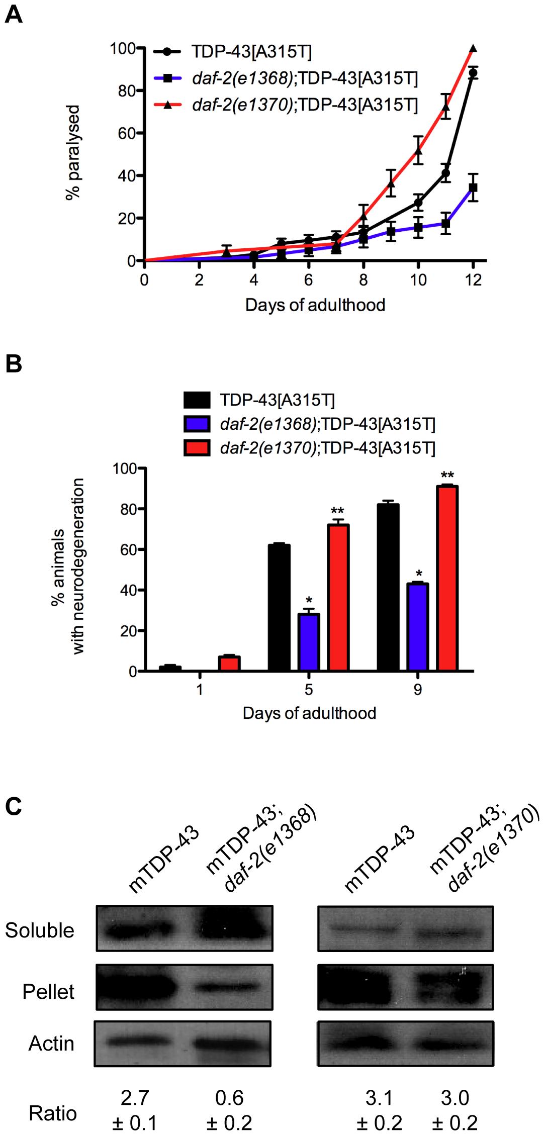Opposing effects of <i>daf-2</i> on proteotoxicity.