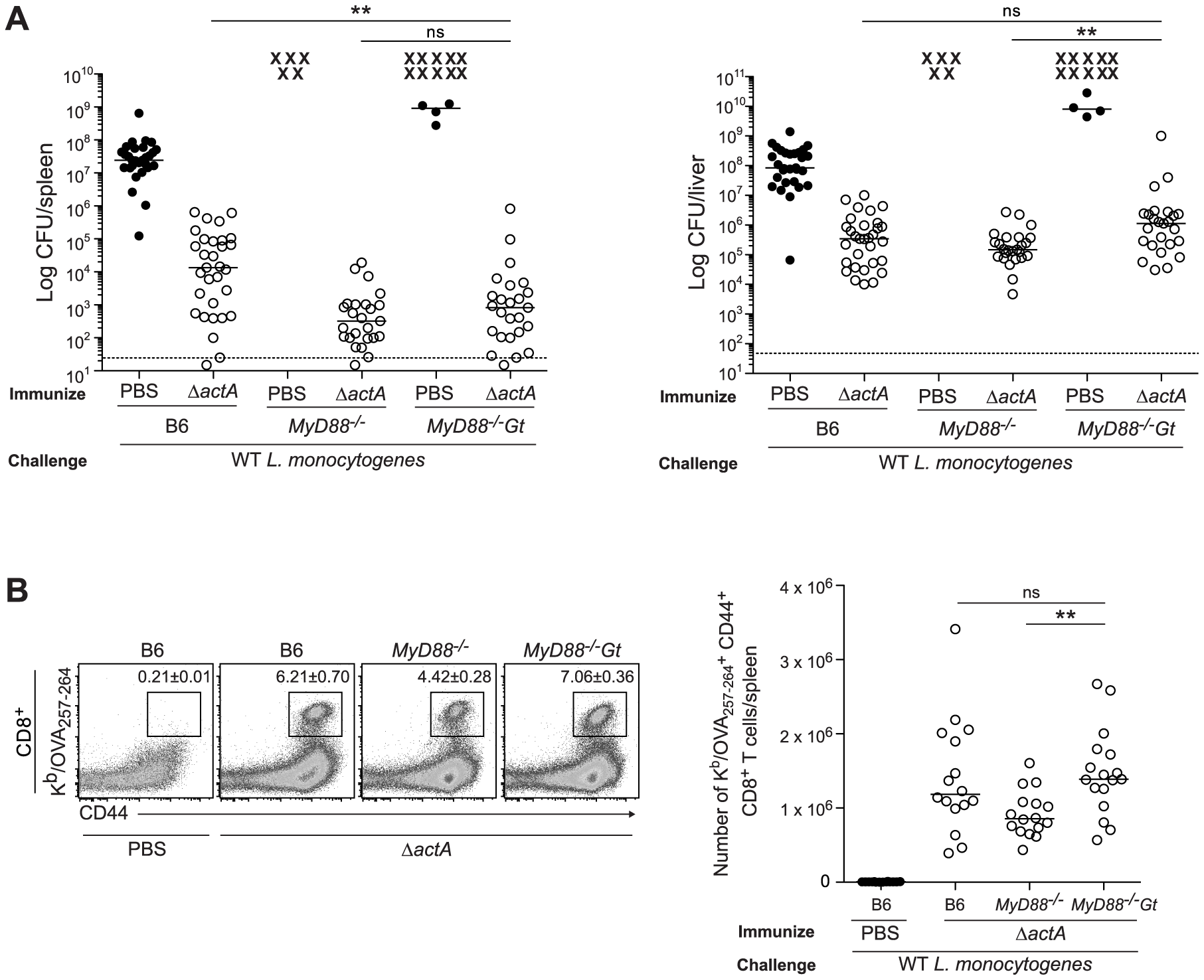 Mice lacking MyD88 and STING are protected from secondary challenge.