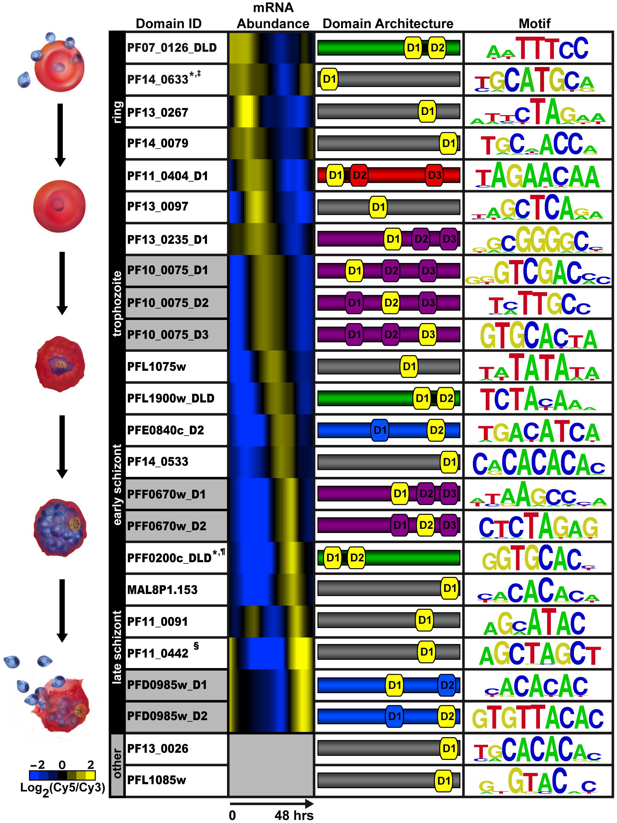 PBM derived motifs for <i>P. falciparum</i> ApiAP2 domains.
