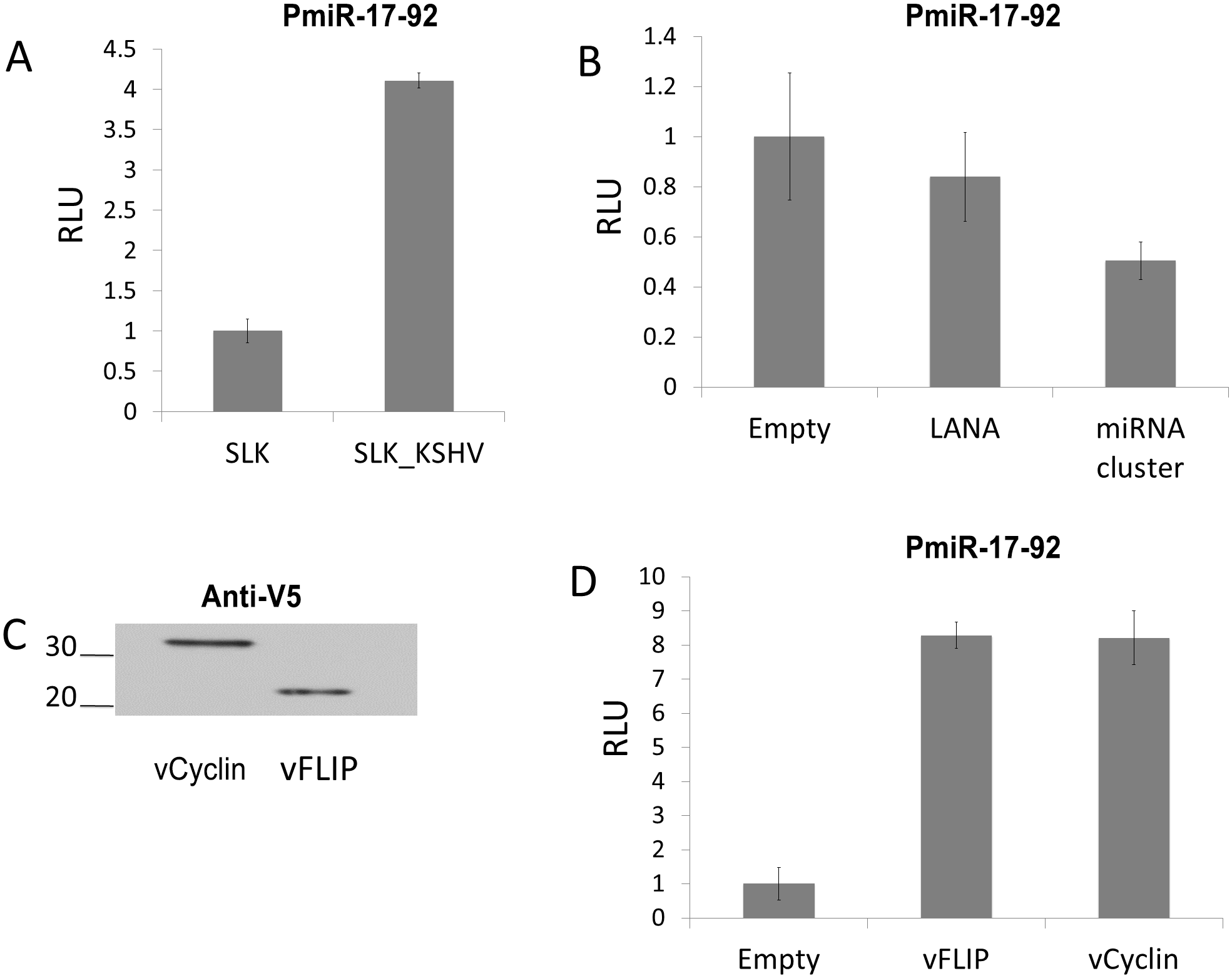 KSHV infection increases expression from the miR-17-92 cluster promoter via vFLIP and vCyclin.
