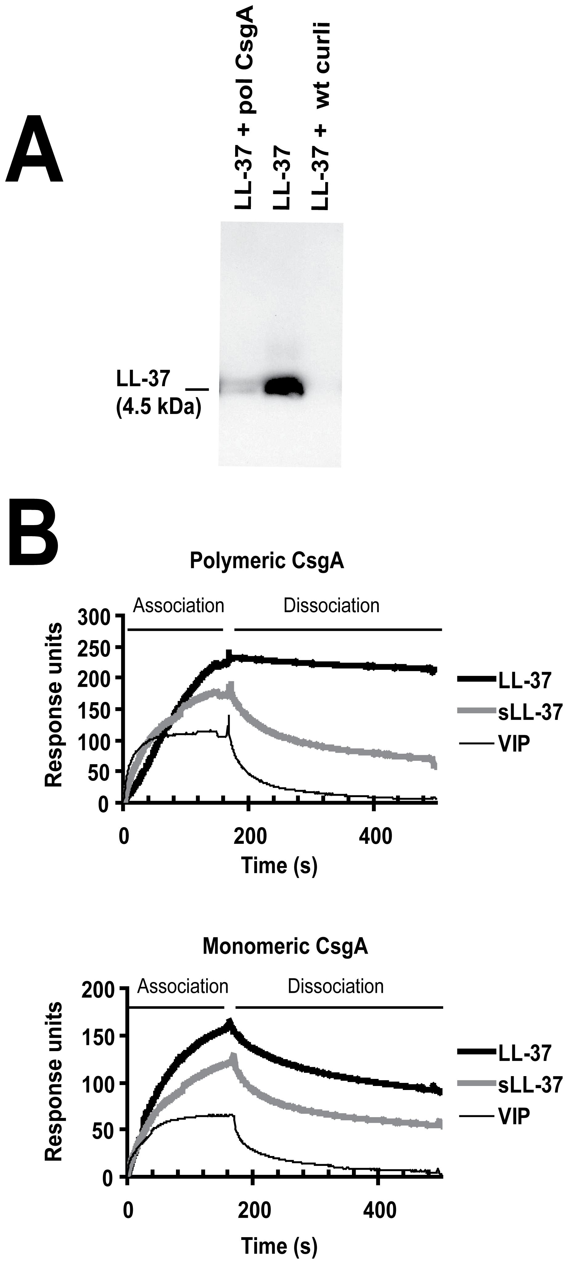 LL-37 binds to recombinant polymerized CsgA and isolated wild-type curli.