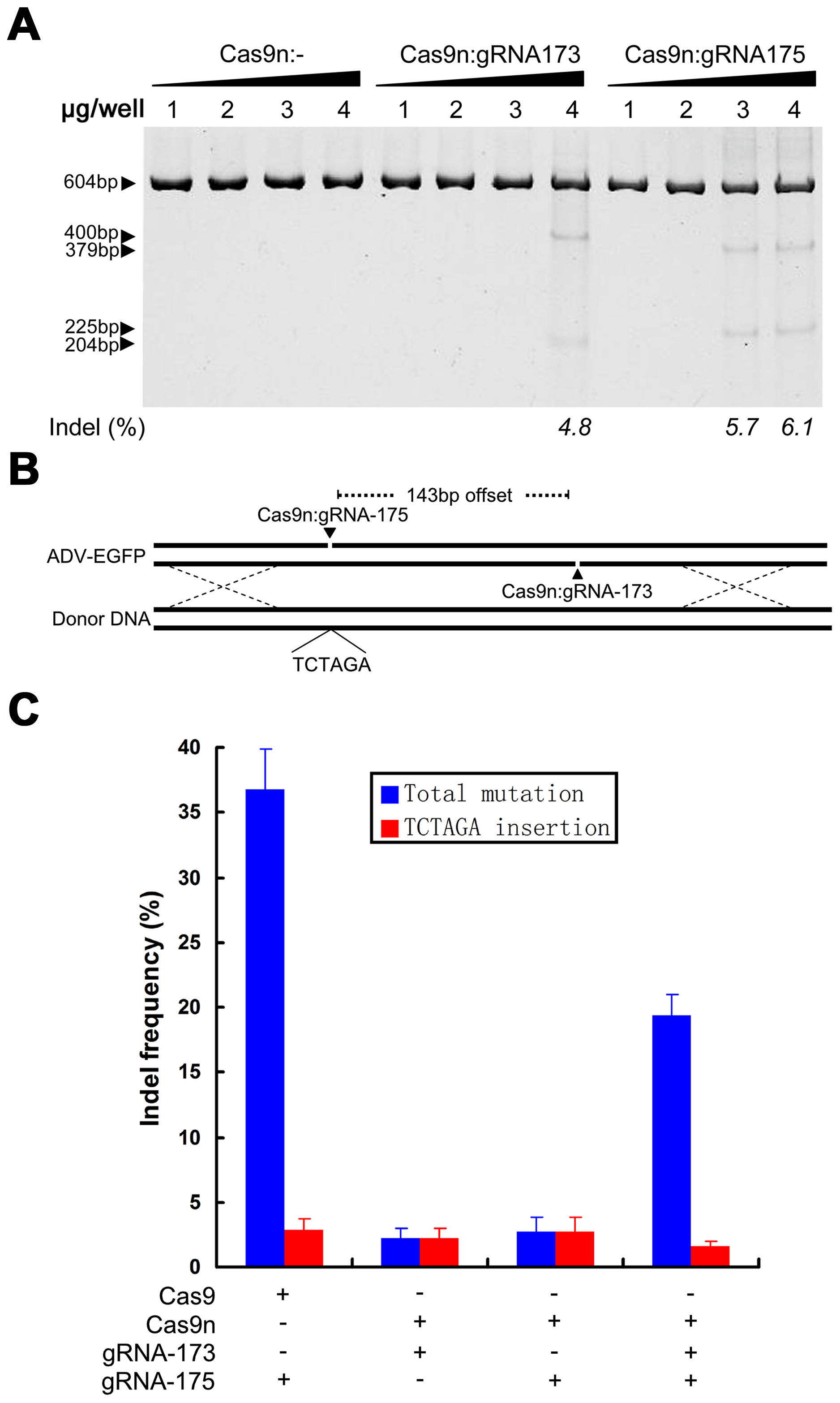 Specific control of the type of mutation using Cas9 nickase.