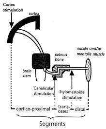 Schéma stimulačních míst v průběhu motorické dráhy lícního nervu.
