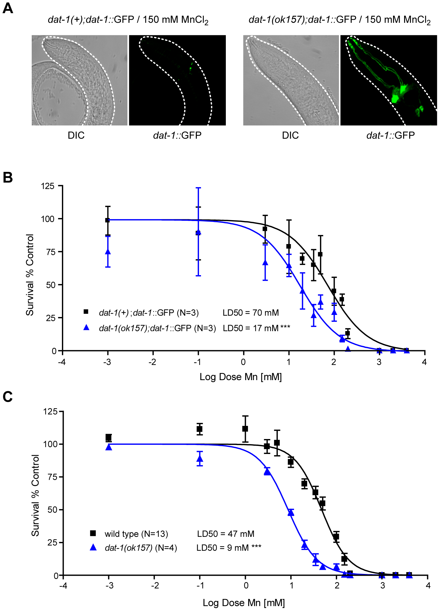 <i>dat-1</i> loss of function induces an overall hypersensitivity to Mn toxicity, but confers neuroprotection to the dopaminergic system.