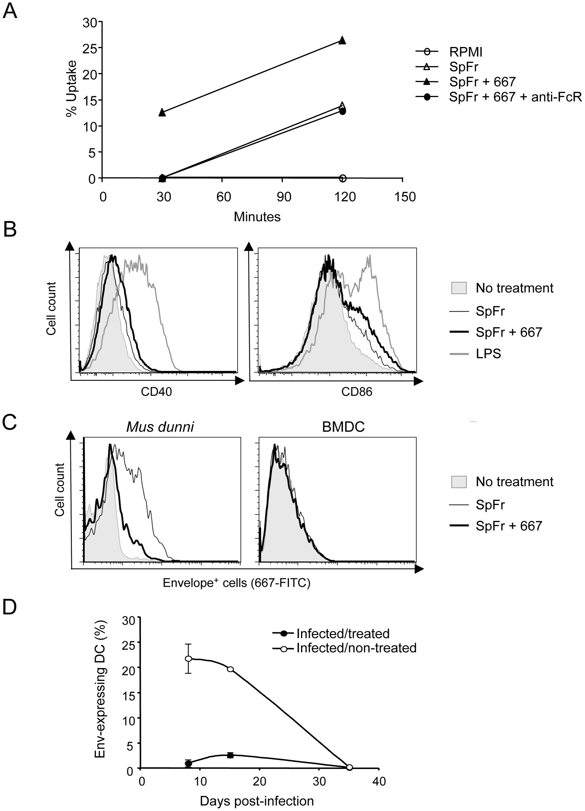 Influence of FrCas<sup>E</sup>-infected cell ICs on BMDCs.