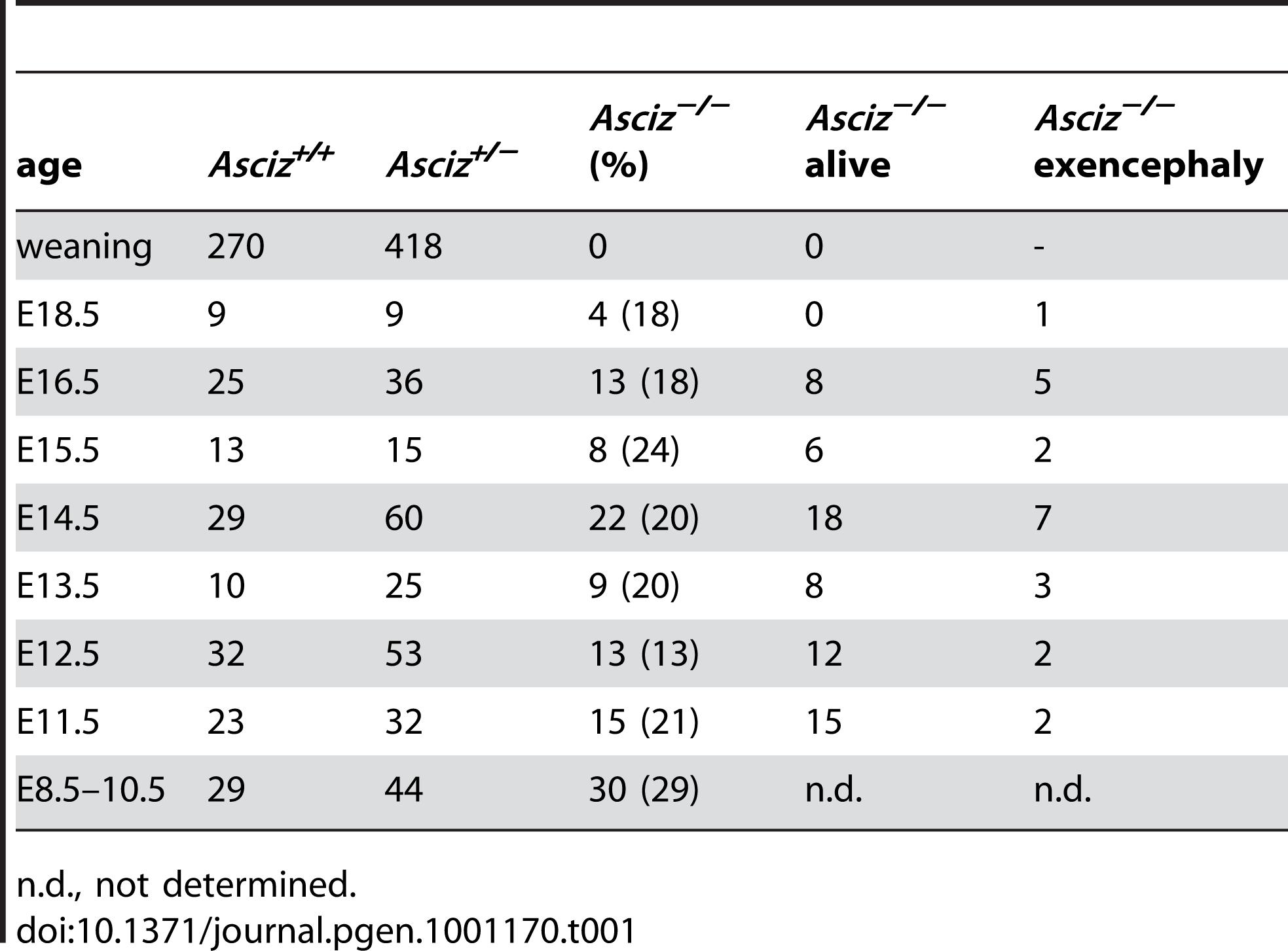 Genotypes of <i>Asciz<sup>+/−</sup></i> intercross litters.