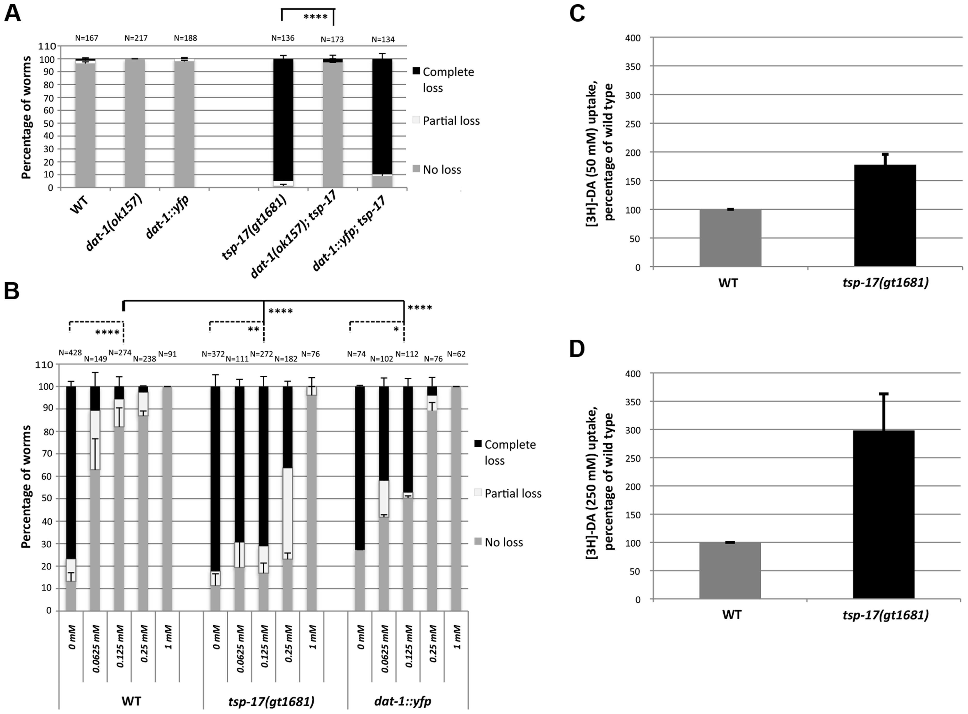 Evidence for DAT-1 hyperactivation in <i>tsp-17</i> worms.