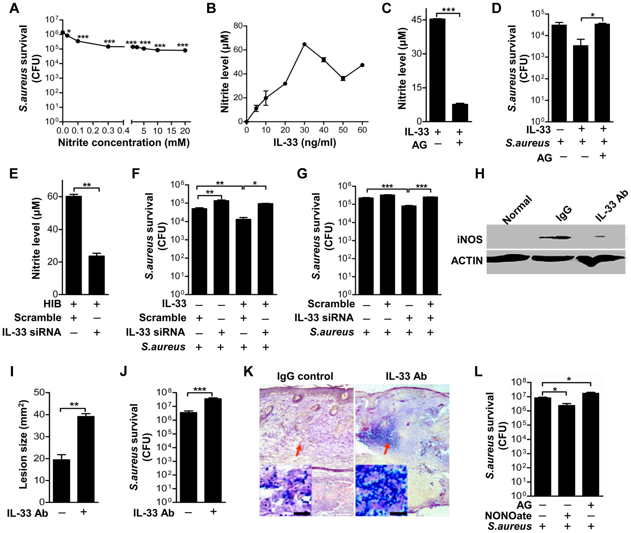 IL-33 activates iNOS to release NO against <i>Staphylococcus aureus</i> infection.