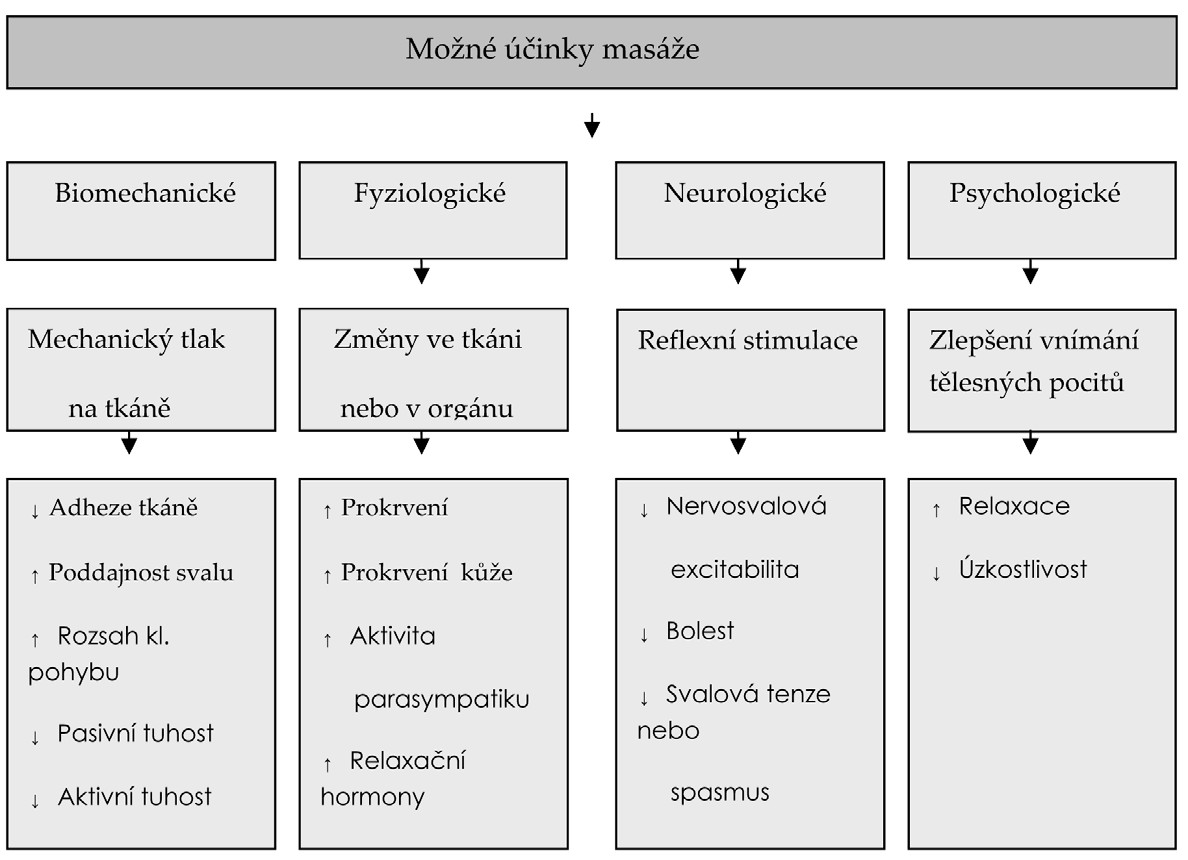 Teoretický model možných účinků masáží podle Weeraponga a spol. (30).