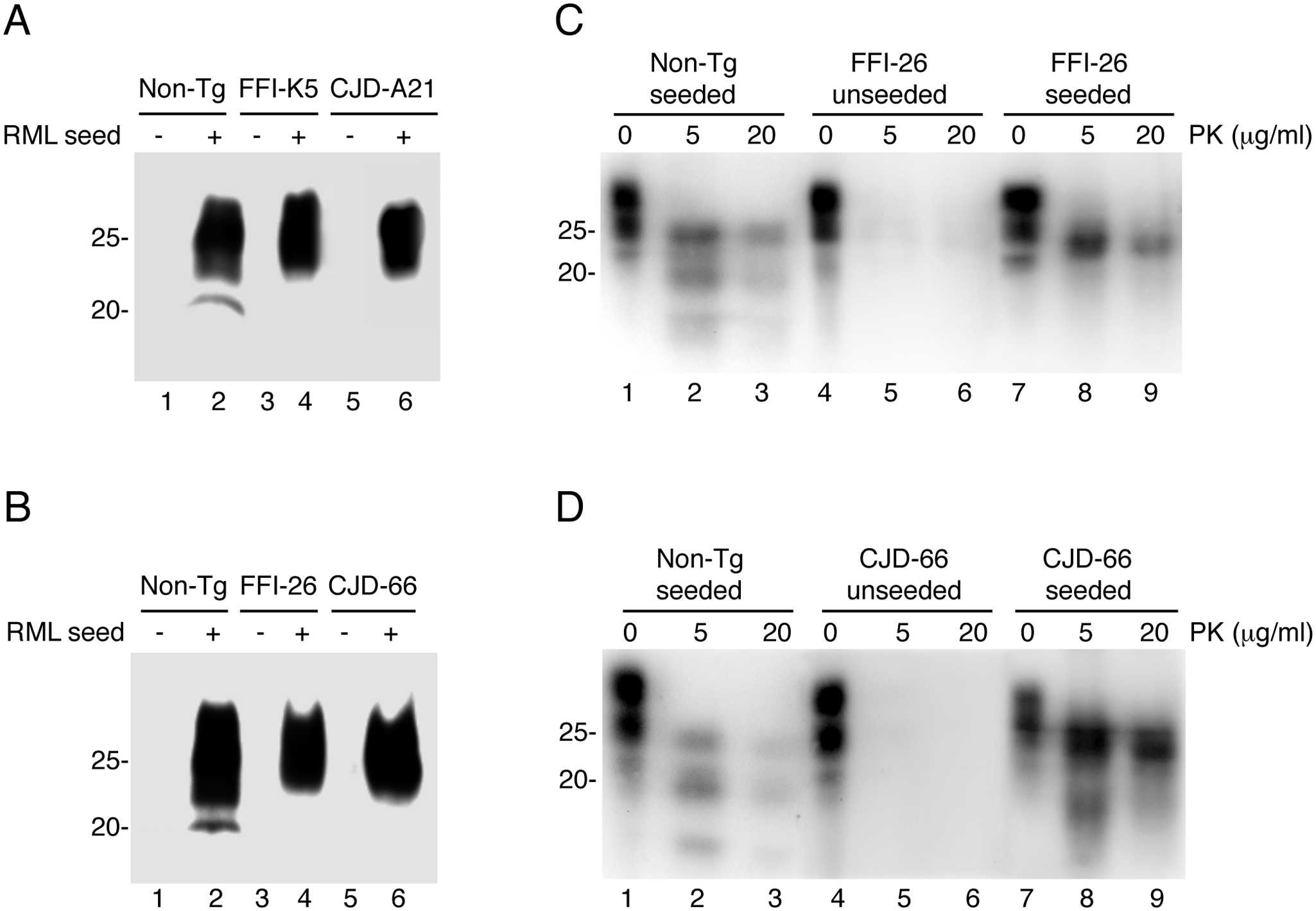Serial PMCA does not detect spontaneously formed PrP<sup>Sc</sup> in Tg(FFI) and Tg(CJD) brains, but the mutant PrPs can be converted into PrP<sup>Sc</sup> <i>in vitro</i>.