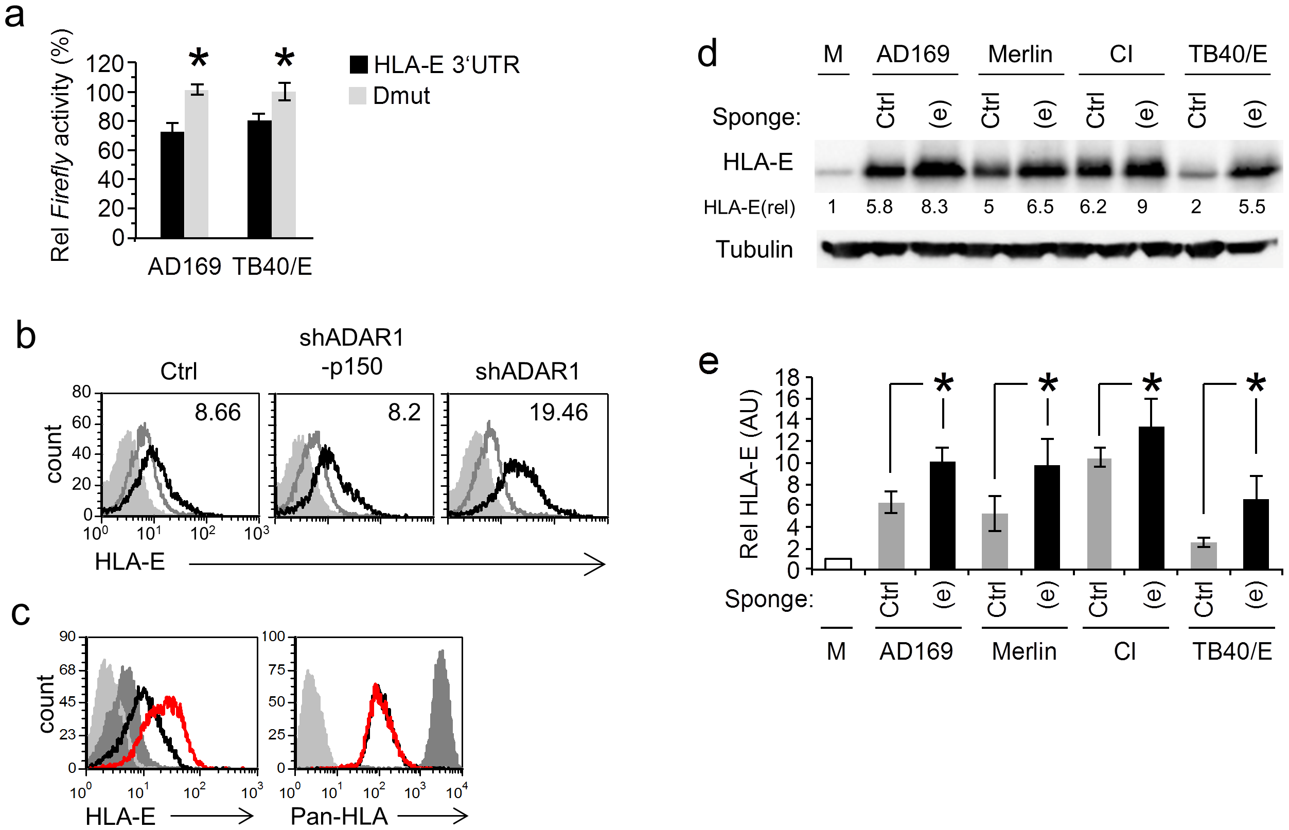 MiR-376a(e) regulates HLA-E expression during HCMV infection.