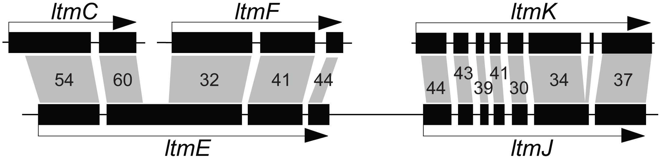 Relationships of <i>ltmE</i> and <i>ltmJ</i> with other <i>LTM</i> genes.
