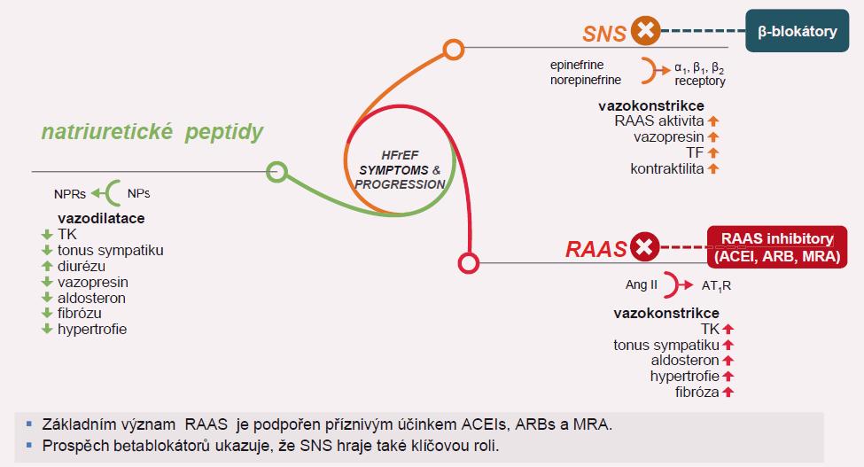 Význam natriuretických peptidů při srdečním selhání.