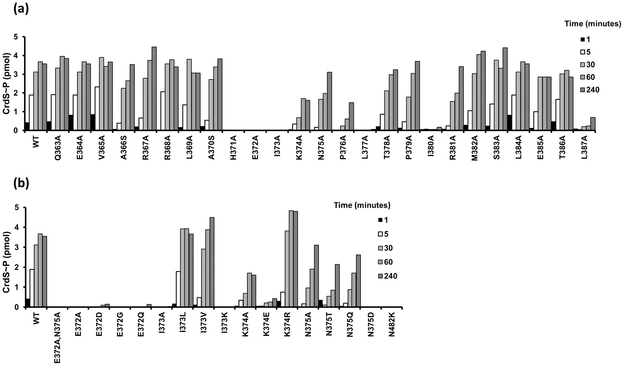 Kinase Activity of CrdS α1 Mutants.